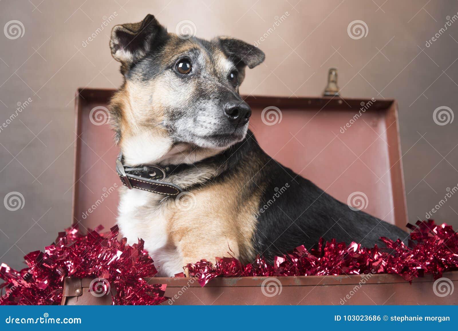 看起来逗人喜爱的小狗的狗坐在闪亮金属片中
