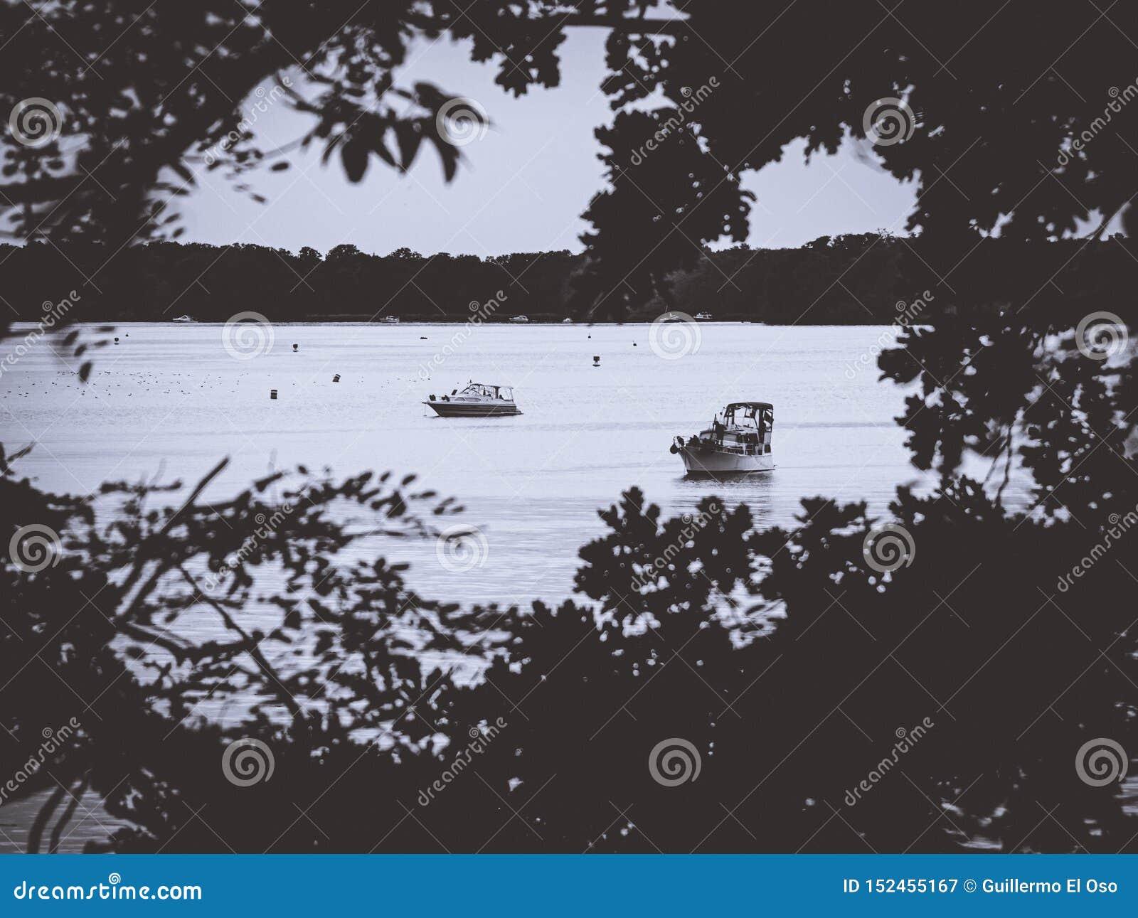 看通过在一个镇静湖的一个叶子孔有小船的