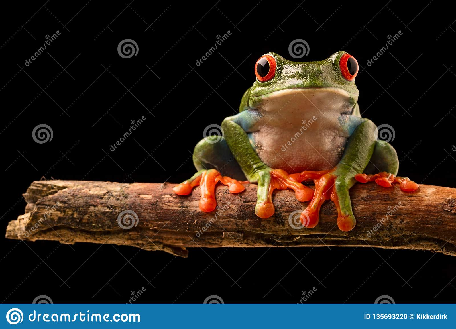 眼睛青蛙红色结构树