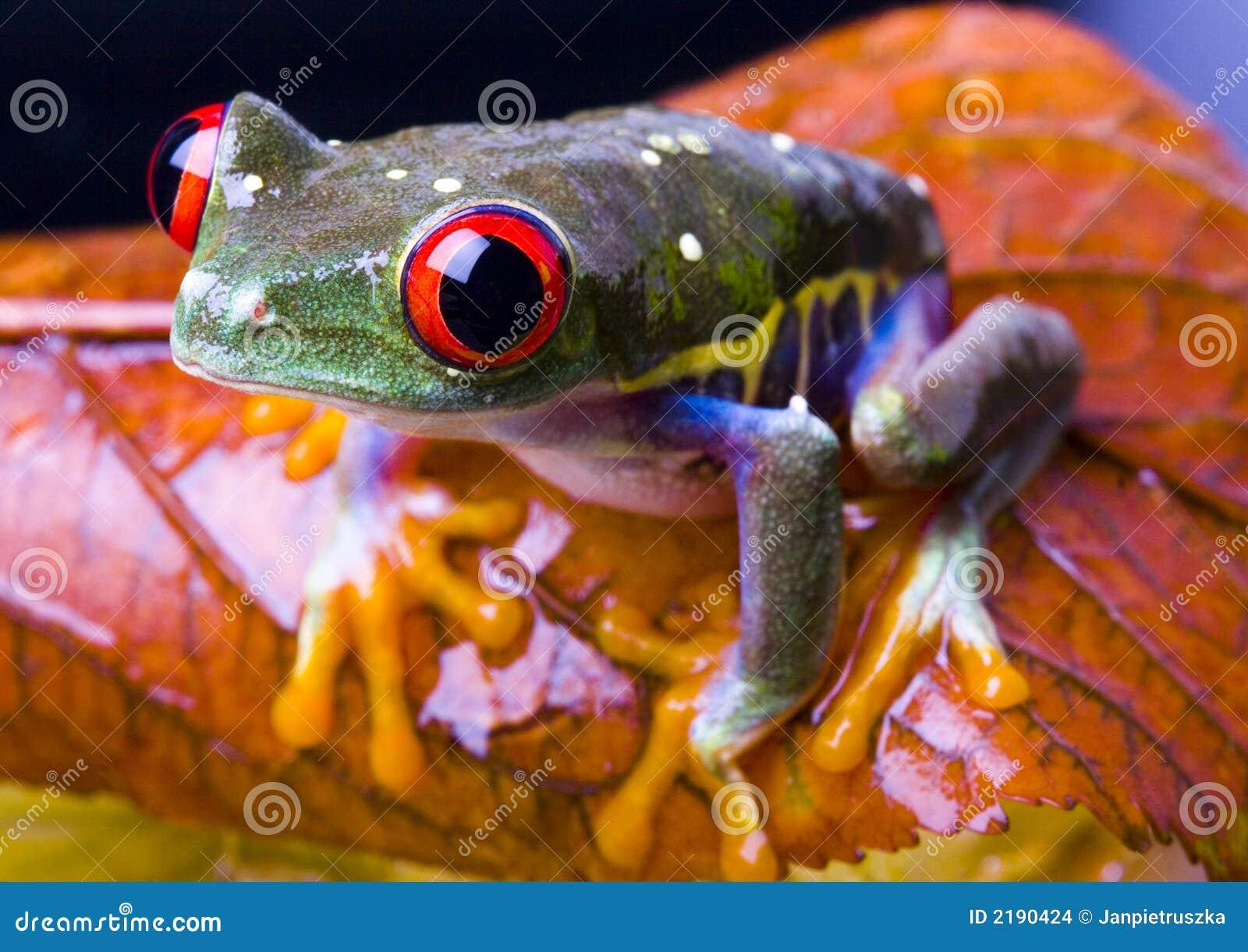 眼睛青蛙红色