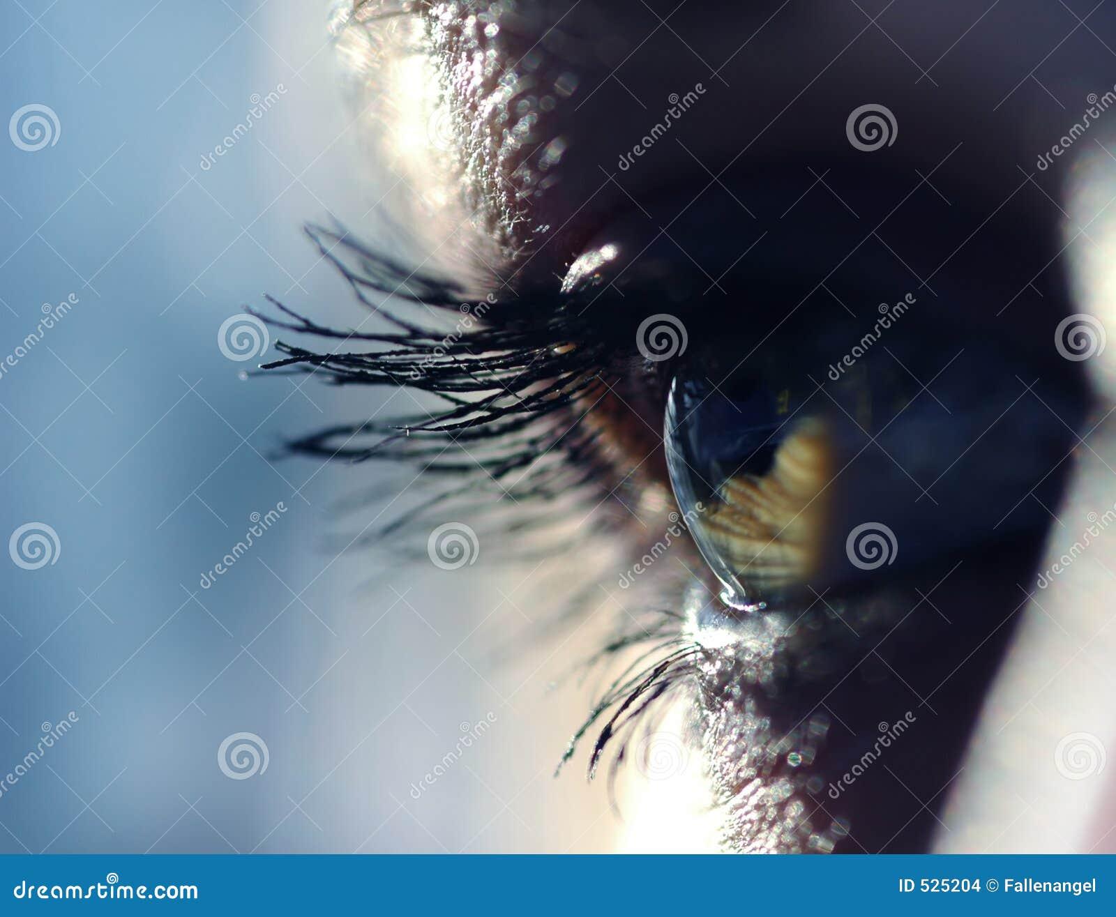 Download 眼睛 库存照片. 图片 包括有 角膜, 竹子, 皮肤, 人们, 参见, 数字式, 眼眉, 设计, 学生, 空白 - 525204