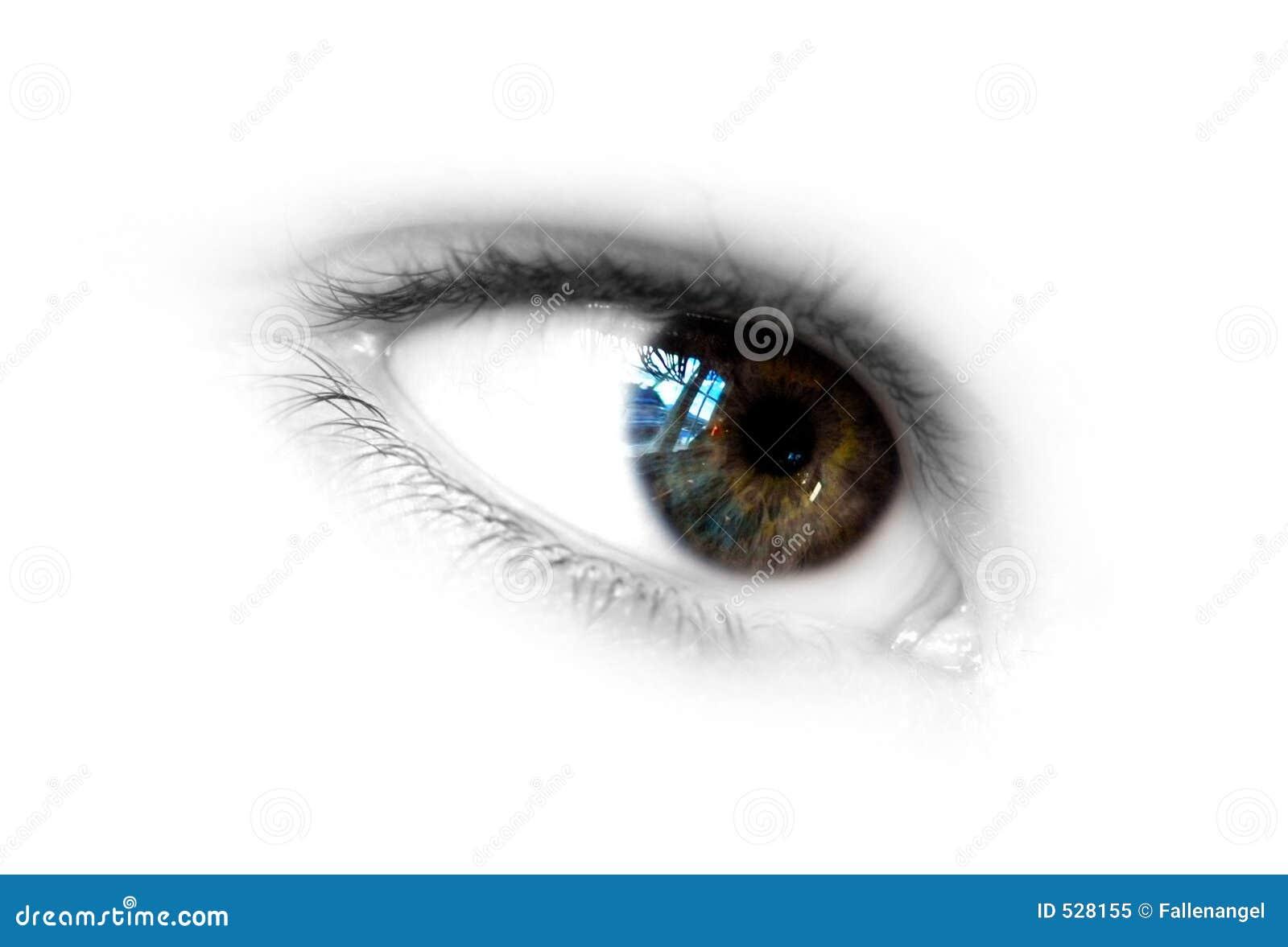 Download 眼睛 库存图片. 图片 包括有 颜色, 角膜, 空白, 抽象, 视窗, 妇女, 学生, 被恫吓的, 竹子, 眼睛 - 528155