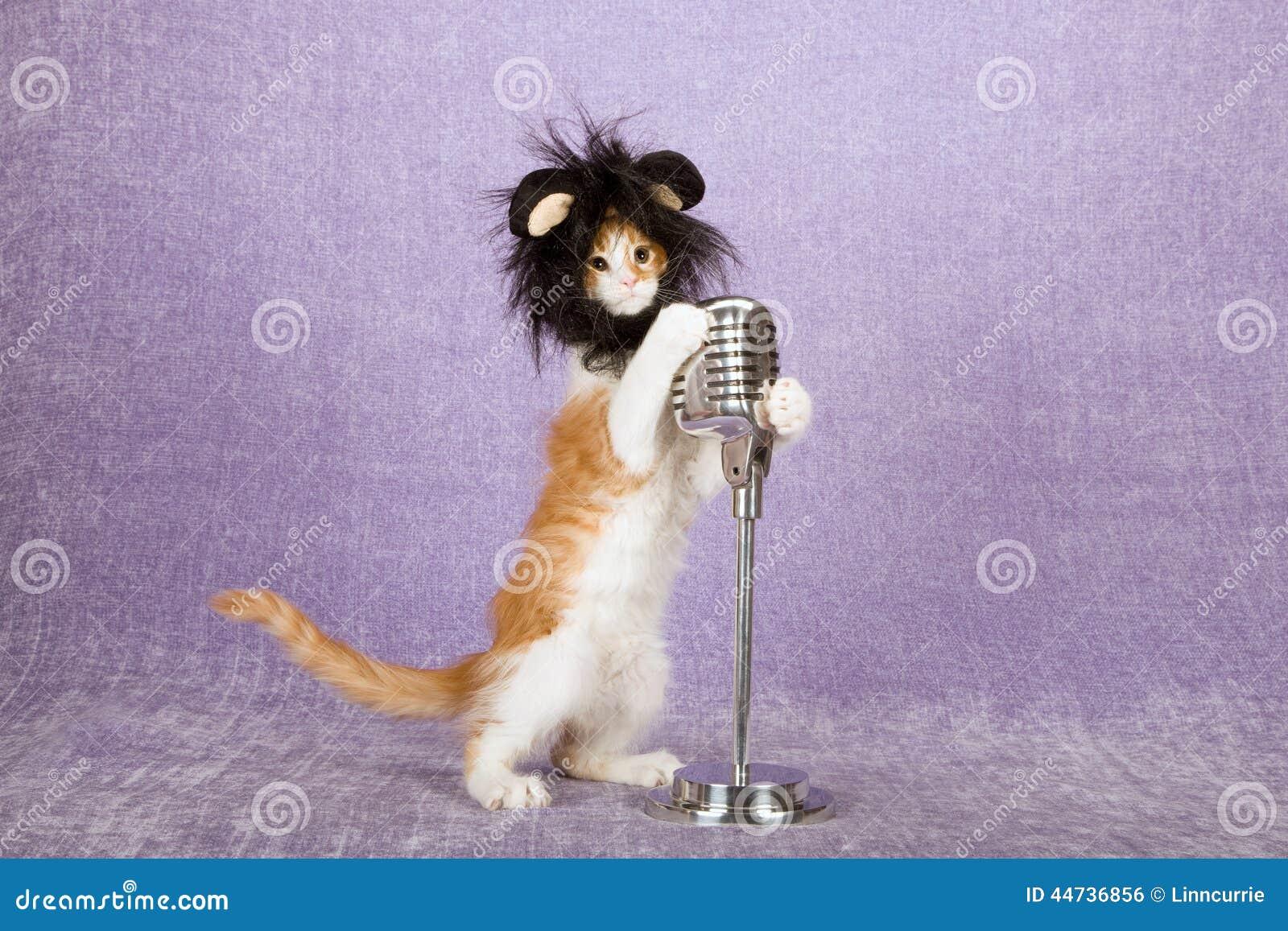 戴着与大耳朵的可笑滑稽的小猫黑毛茸的动物假发保持葡萄酒在立场的伪造品话筒