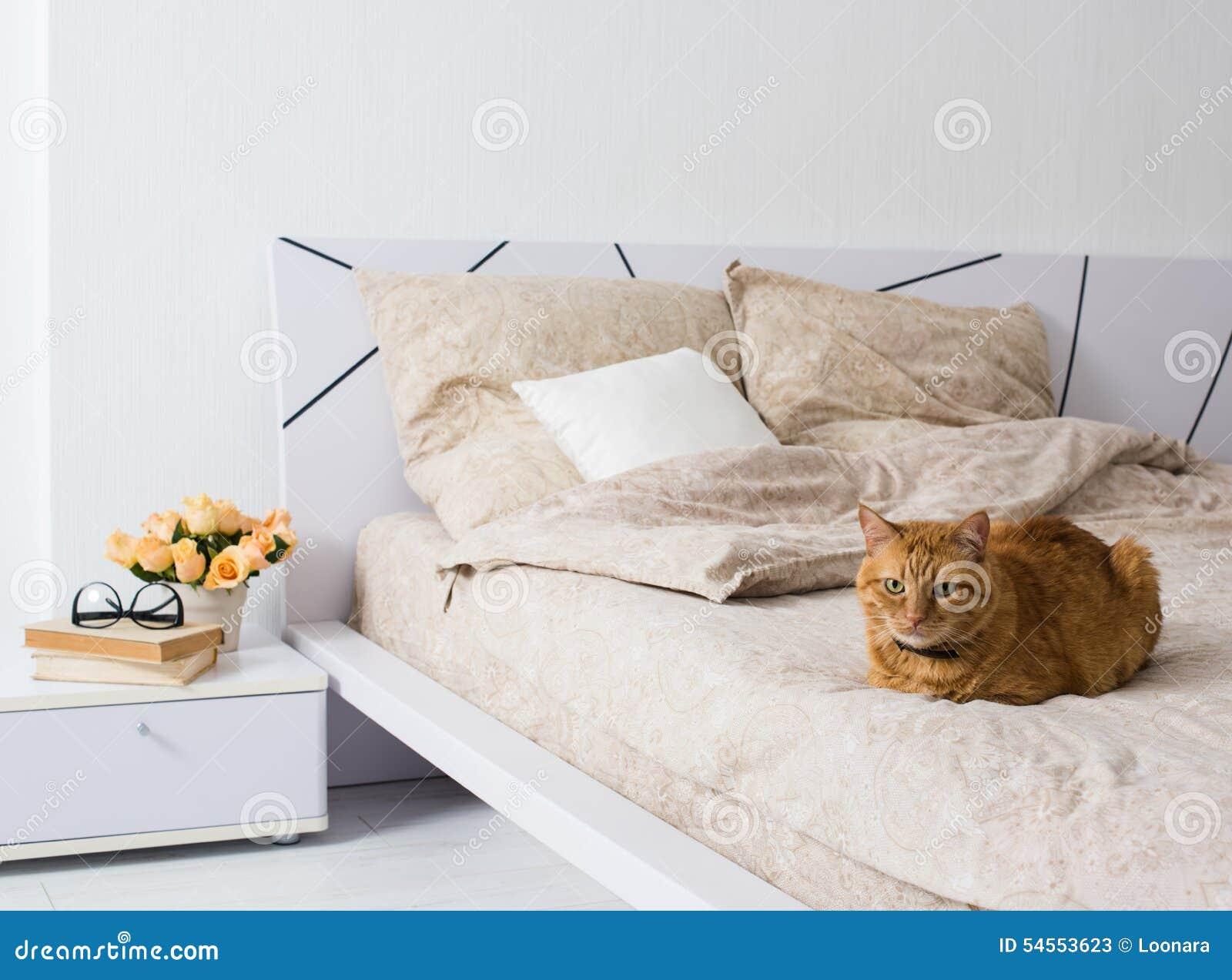 梦见家里猫尿在床上
