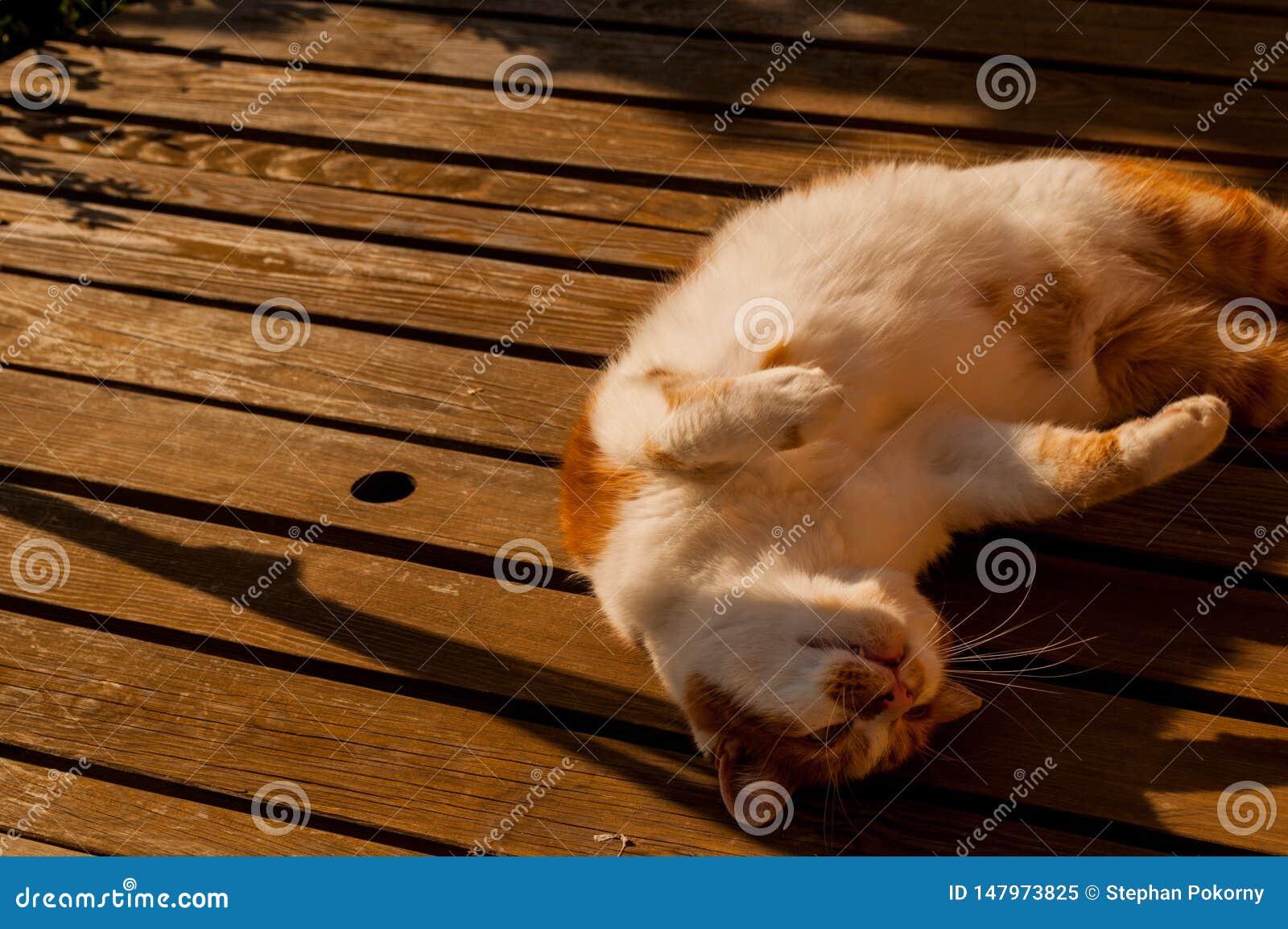 睡觉在桌上的猫