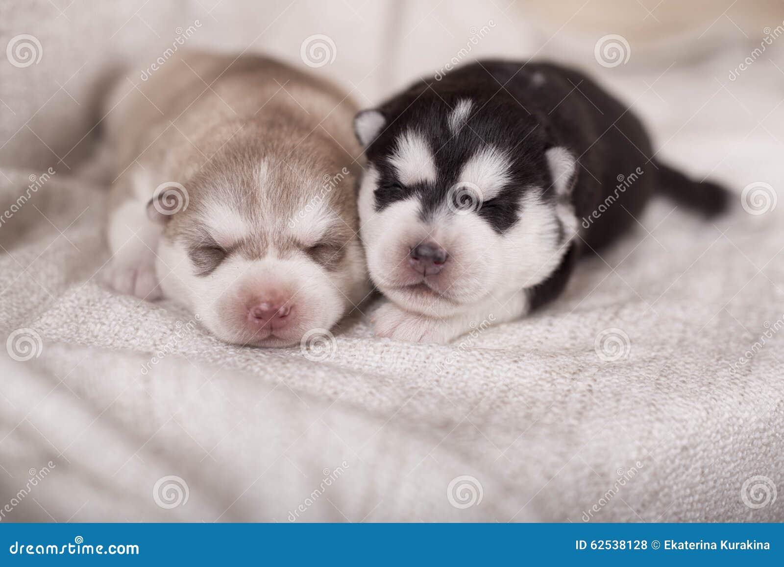 睡觉逗人喜爱的矮小的新出生的爱斯基摩一起说谎和