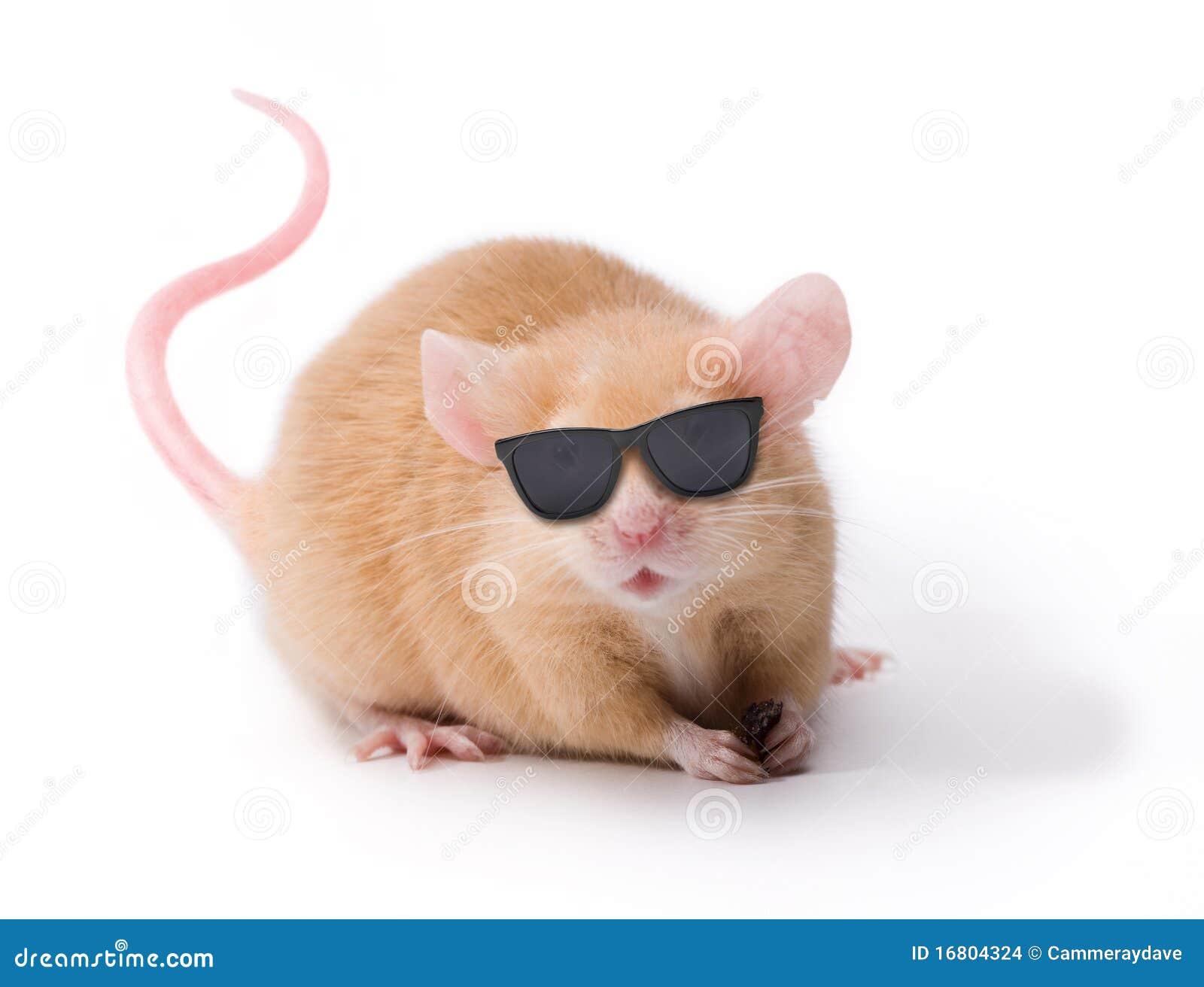 瞎的鼠标太阳镜