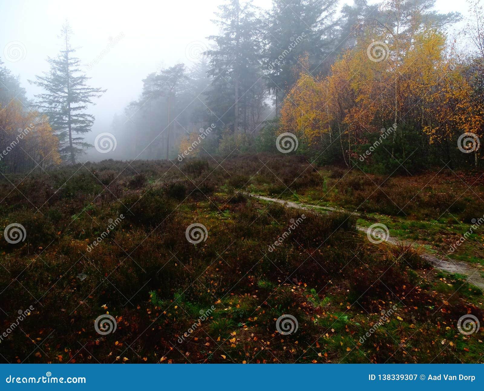 石南花的领域在五颜六色的秋天风景的