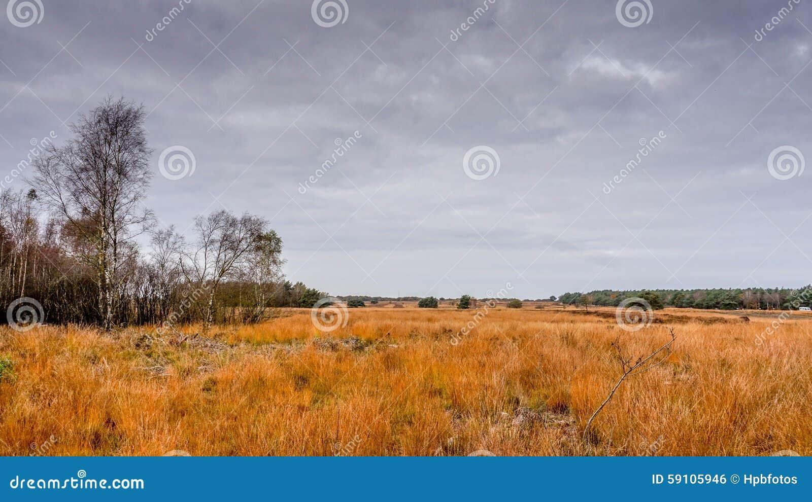 石南花领域在秋天
