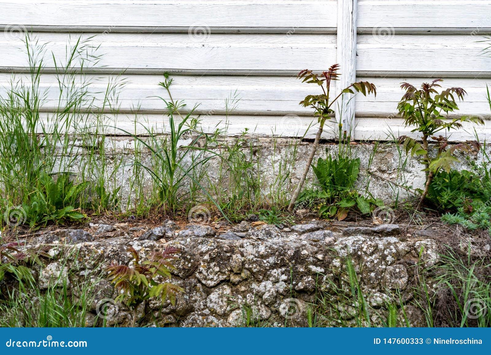 石头和木背景的小植物