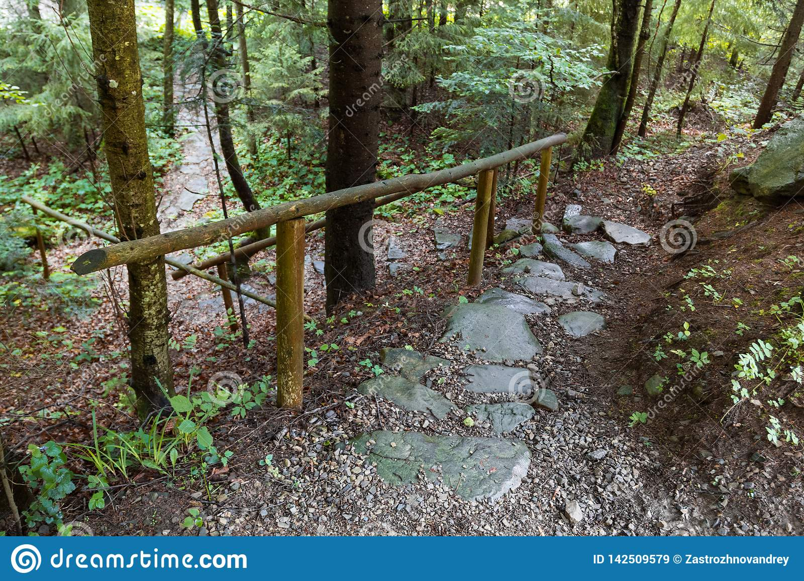 石森林足迹在山森林里