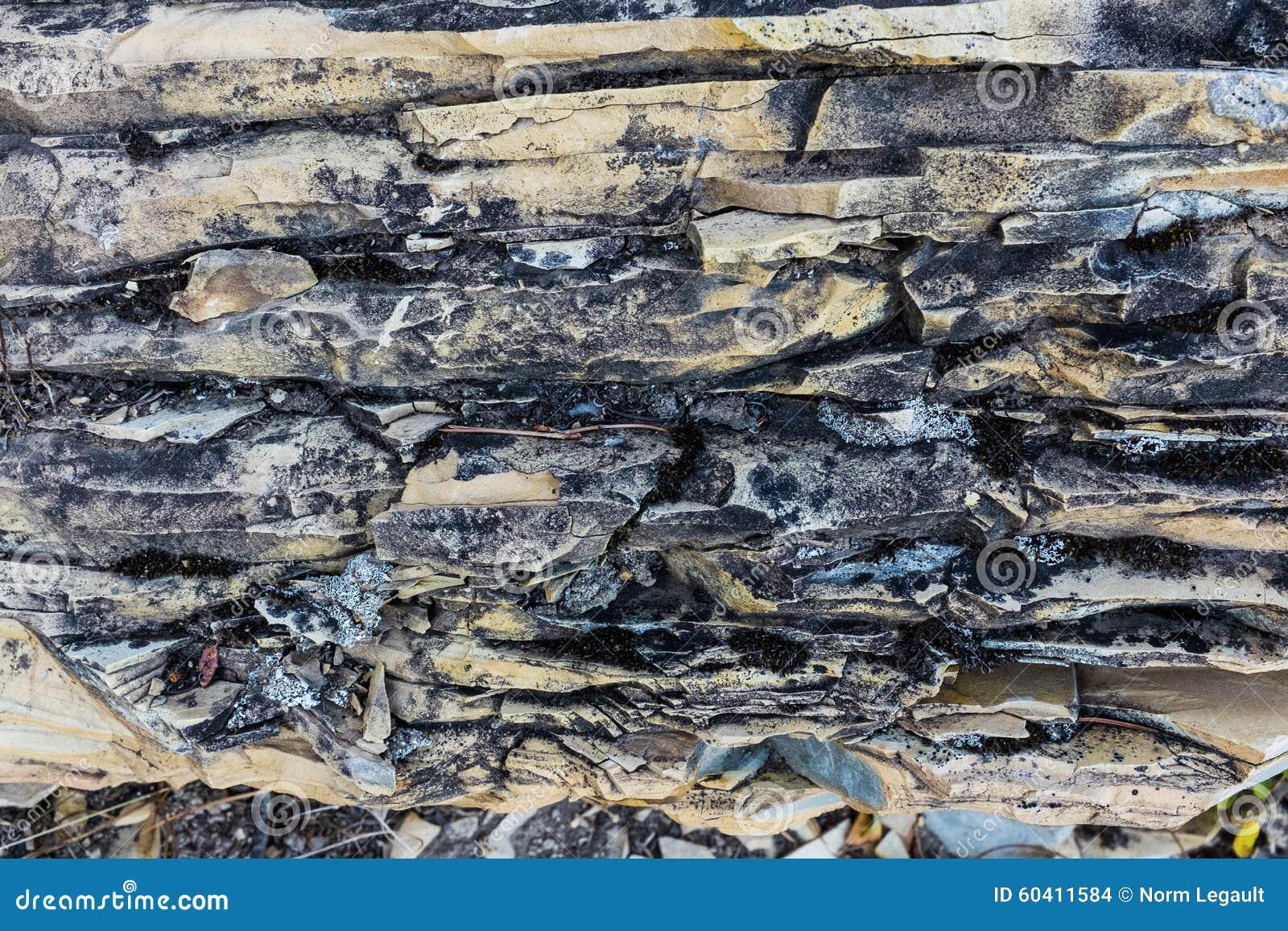 石灰石和dolostone纹理