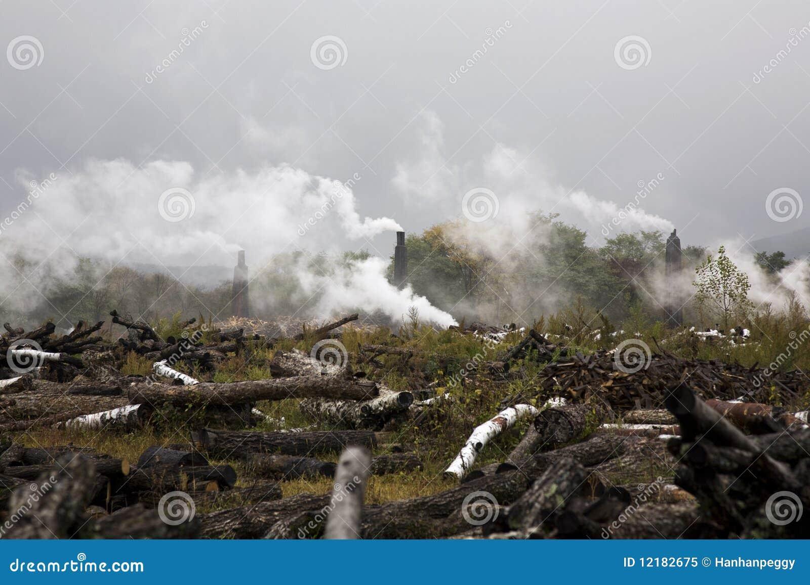 砍伐森林环境污染