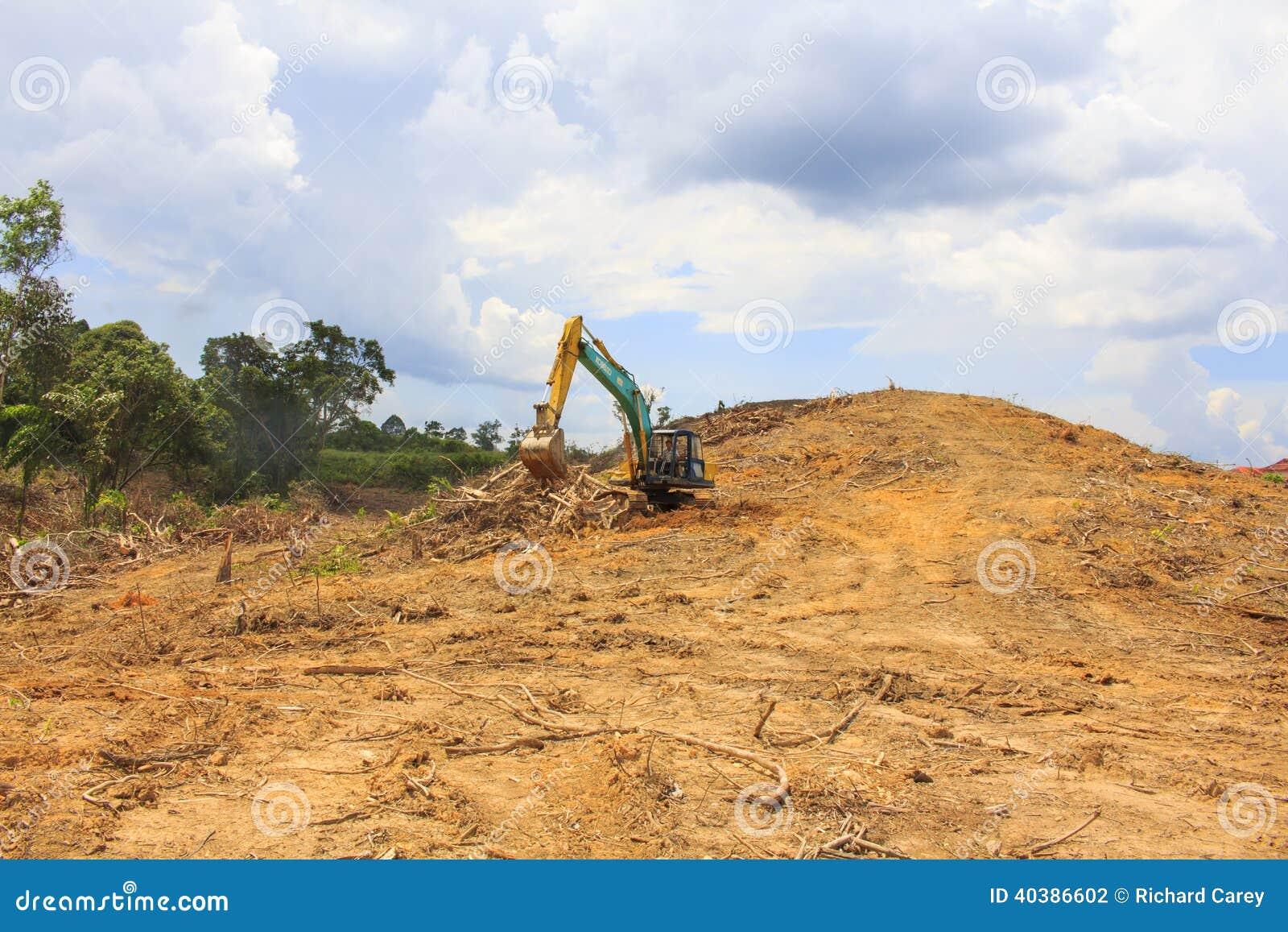 砍伐森林环境问题
