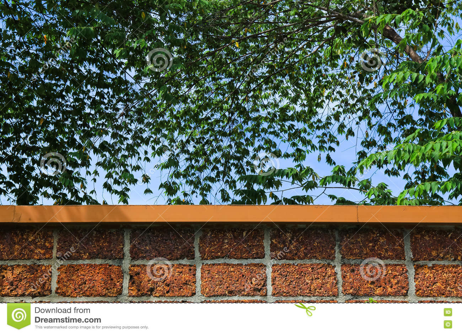 砖墙和绿色叶子和蓝天