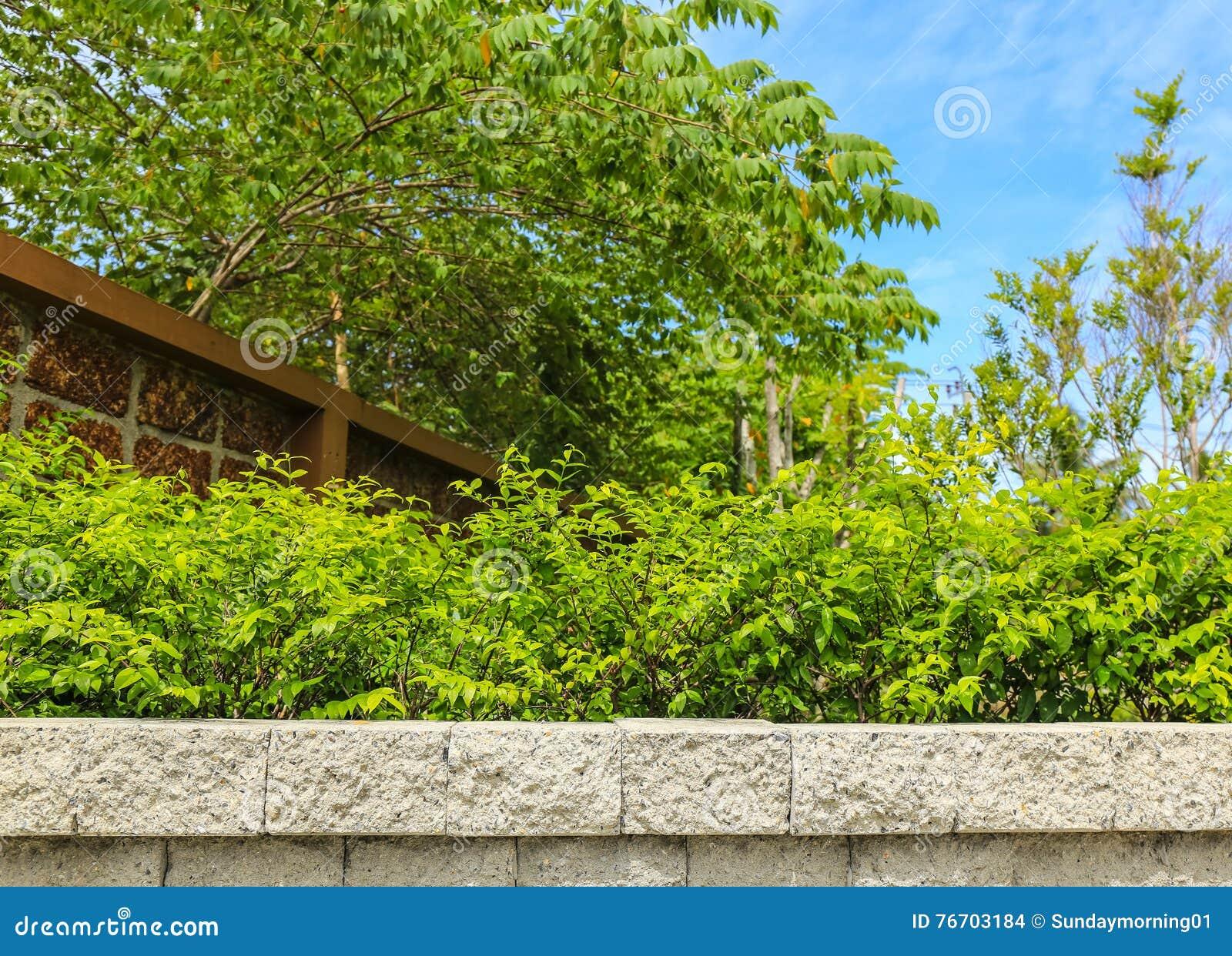 砖墙和绿色叶子