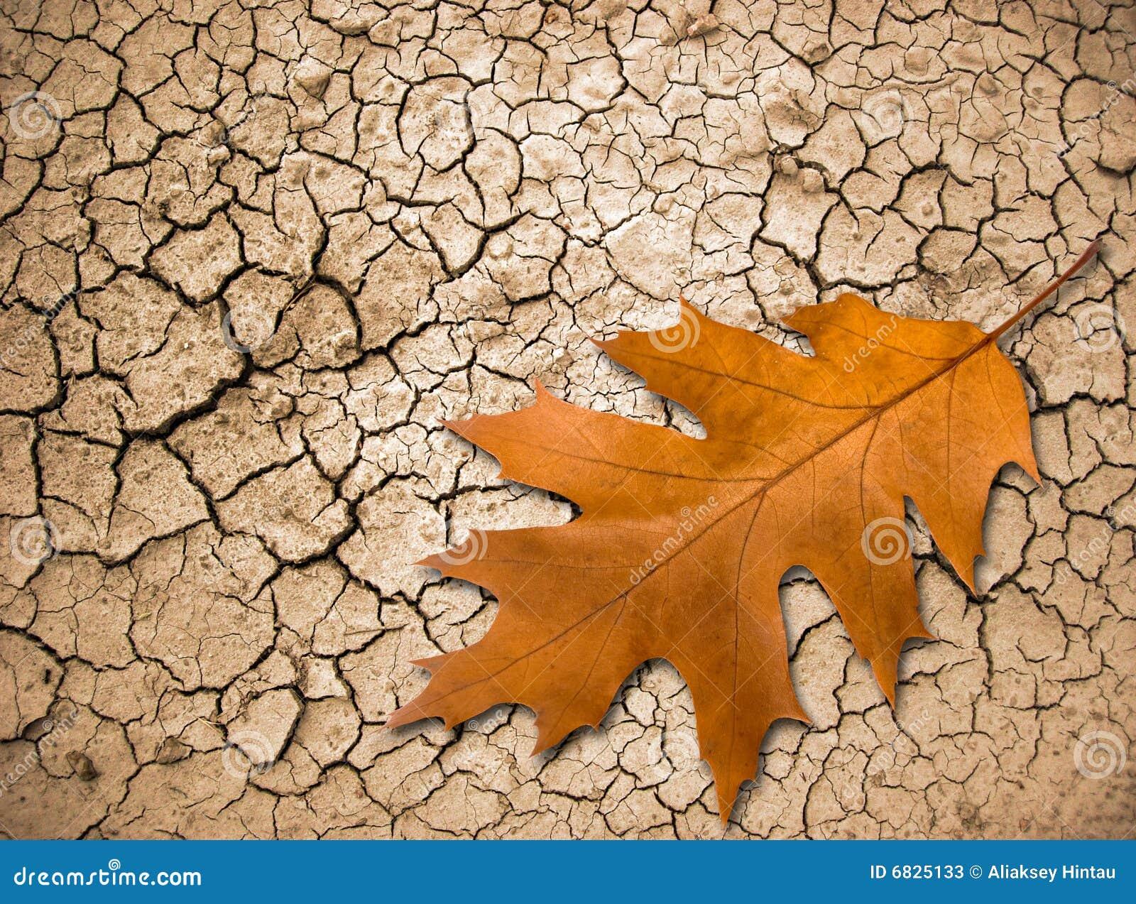 破裂的地面叶子橡木