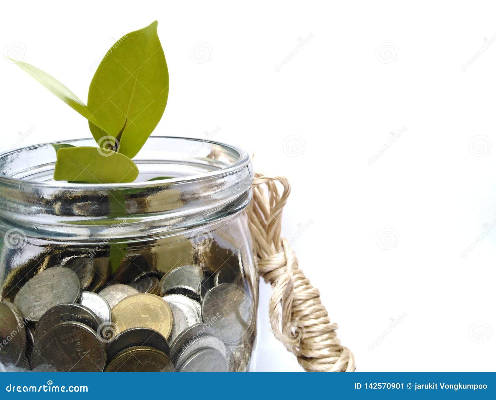 硬币增长象投资挣金钱增长象树的树沟通