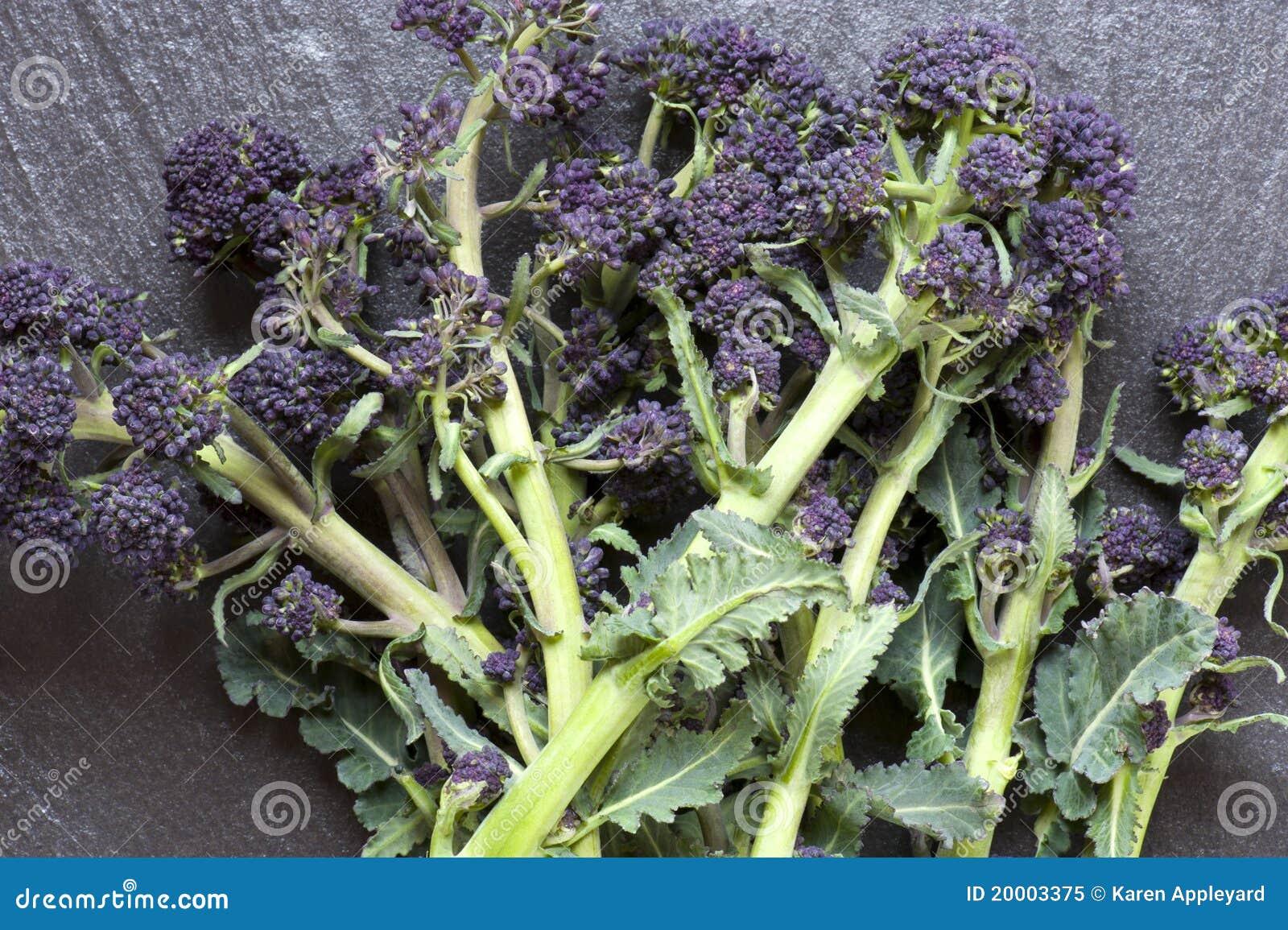 硬花甘蓝紫色发芽
