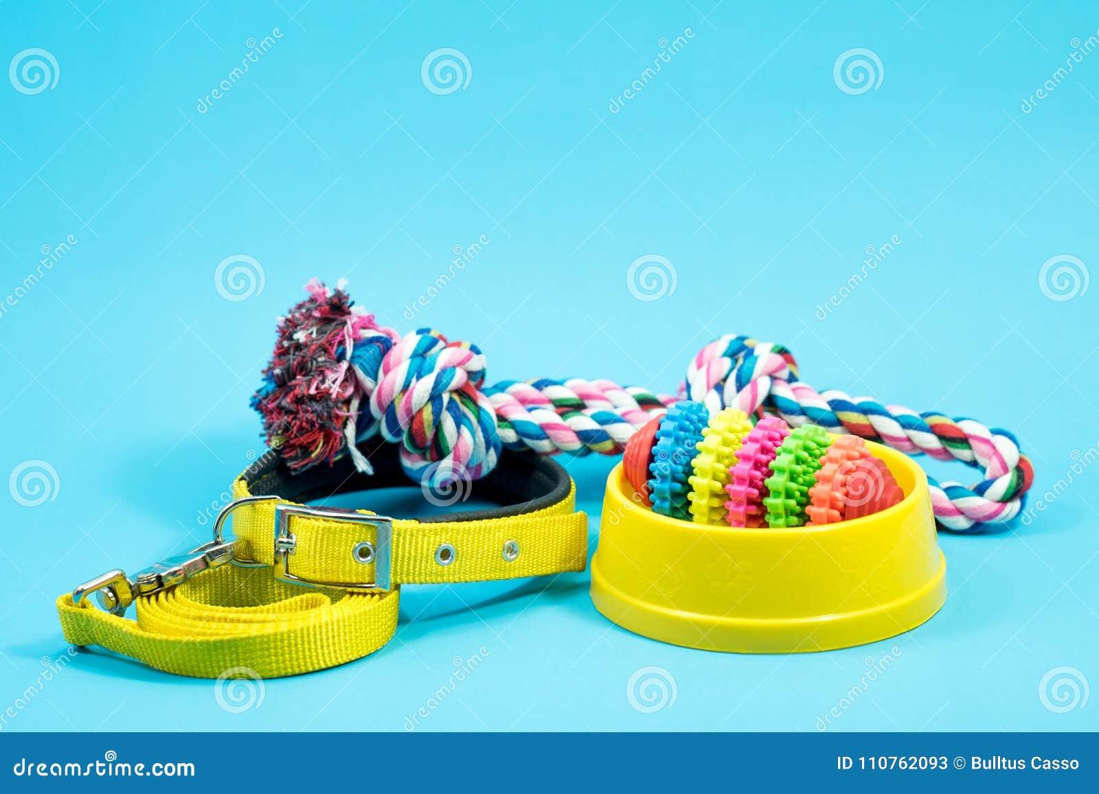 碗、衣领有玩具绳索的和叮咬为蓝色背景系住