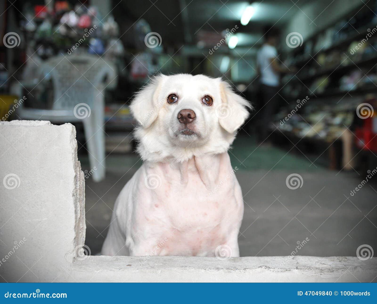 色女和公狗�9��yl#�+_神色在从一家商店的狗在曼谷街上.
