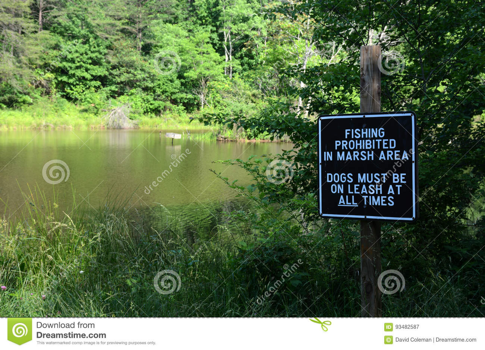 禁止的捕鱼
