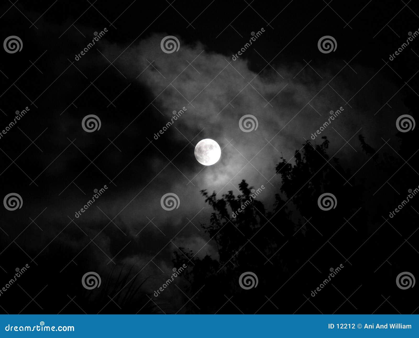 秀丽月亮晚上