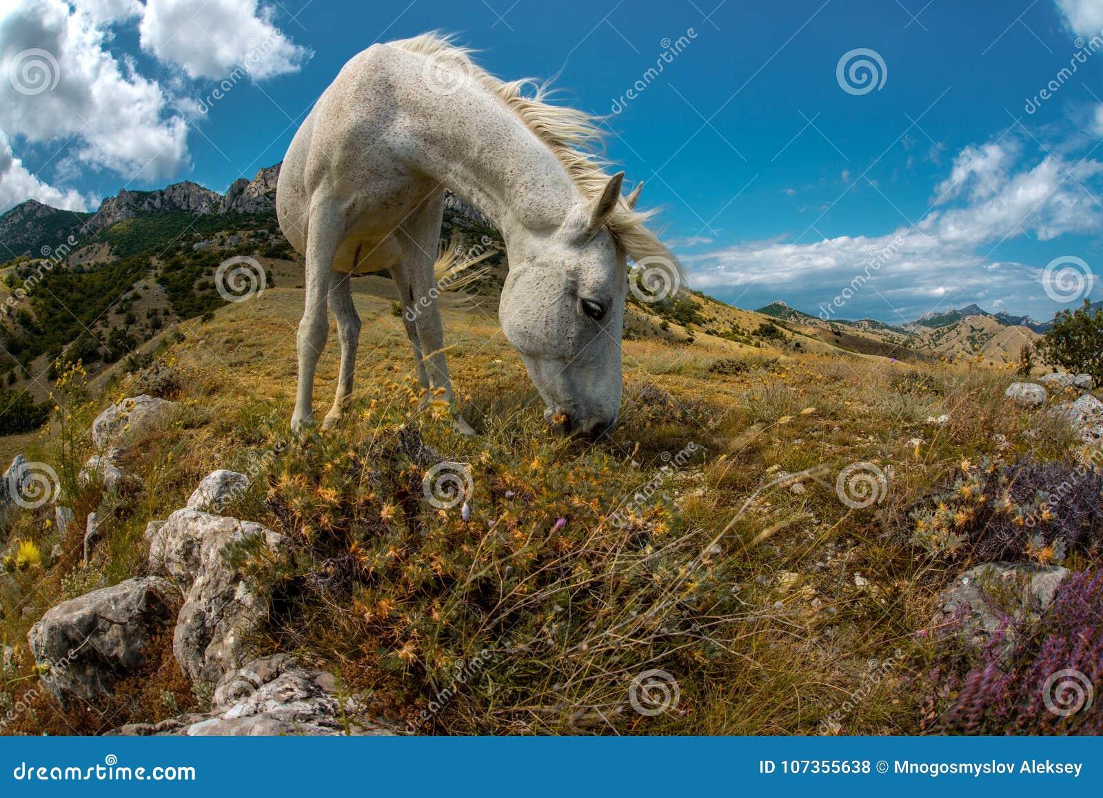 秀丽自然与白马的山风景