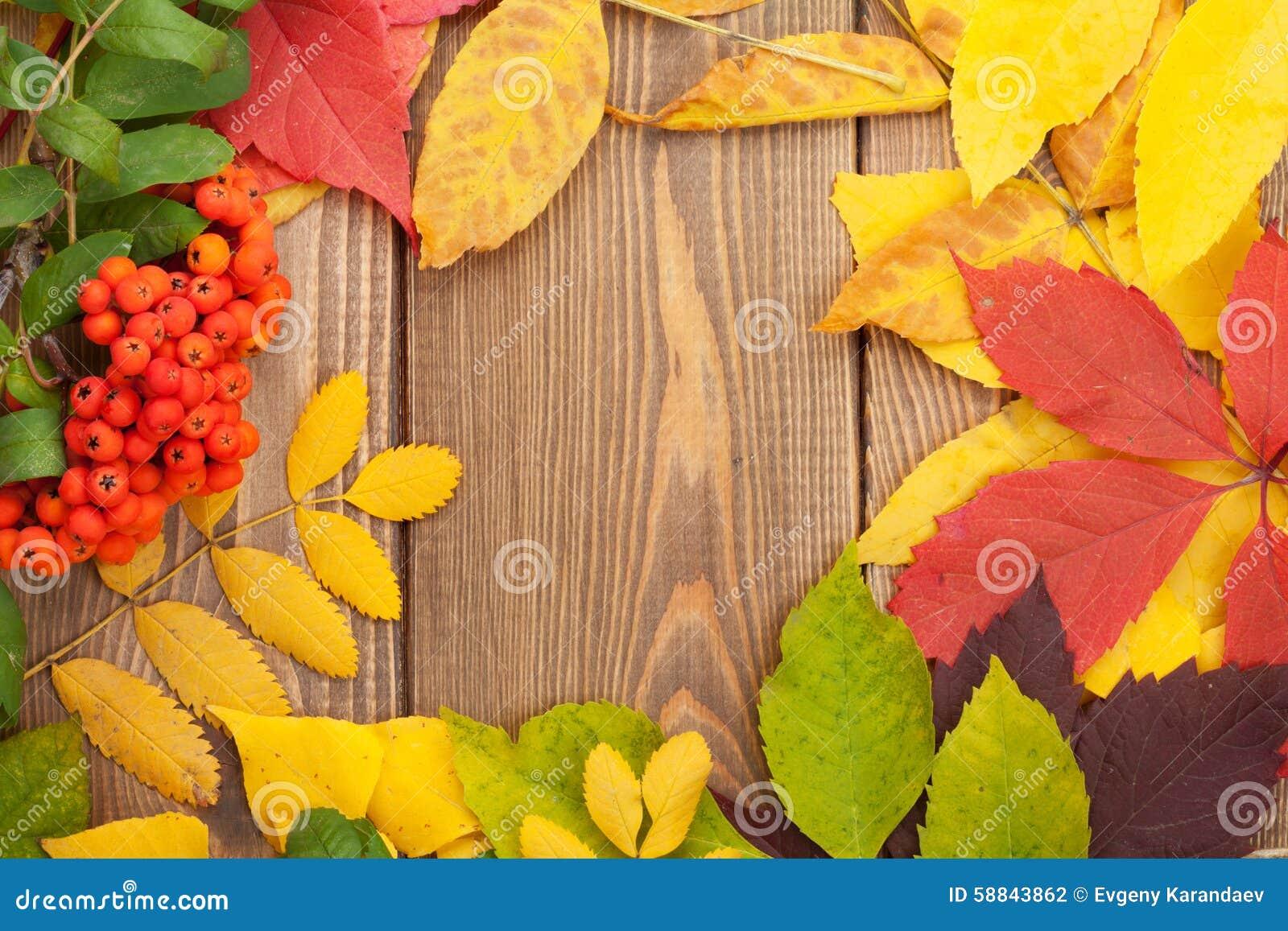 秋叶和花楸浆果在木背景