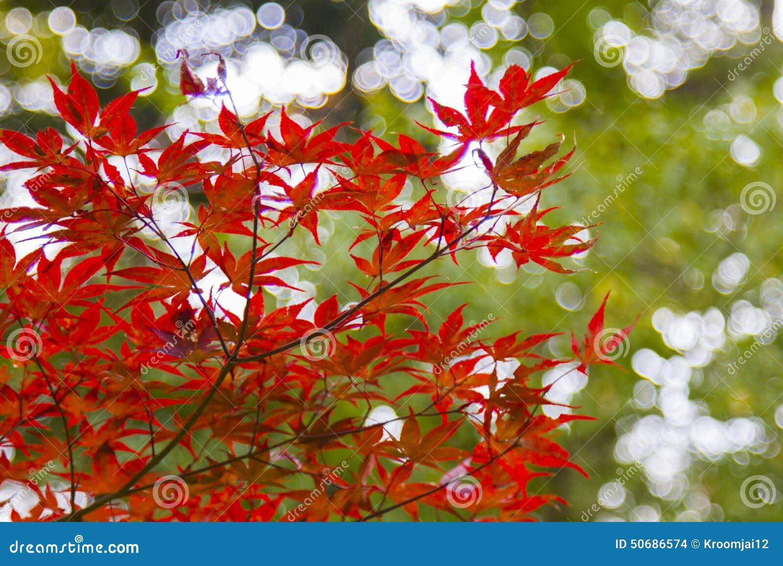 Download 秋叶在日本 库存照片. 图片 包括有 横向, 叶子, 颜色, ,并且, 一些, 绿色, 红色, 关闭, 东京 - 50686574