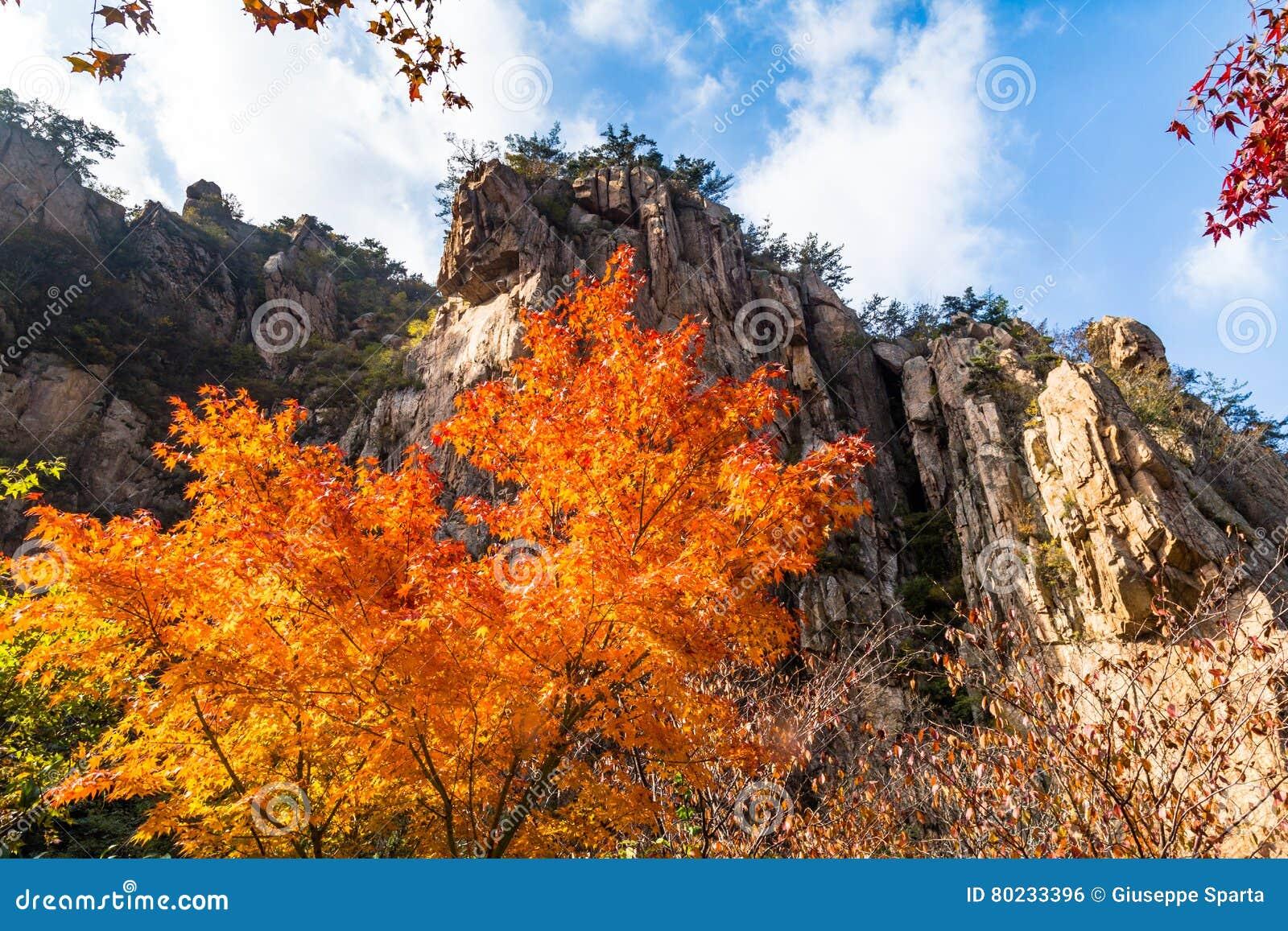 秋叶在邶Jiu水族落后,老山山,青岛,中国