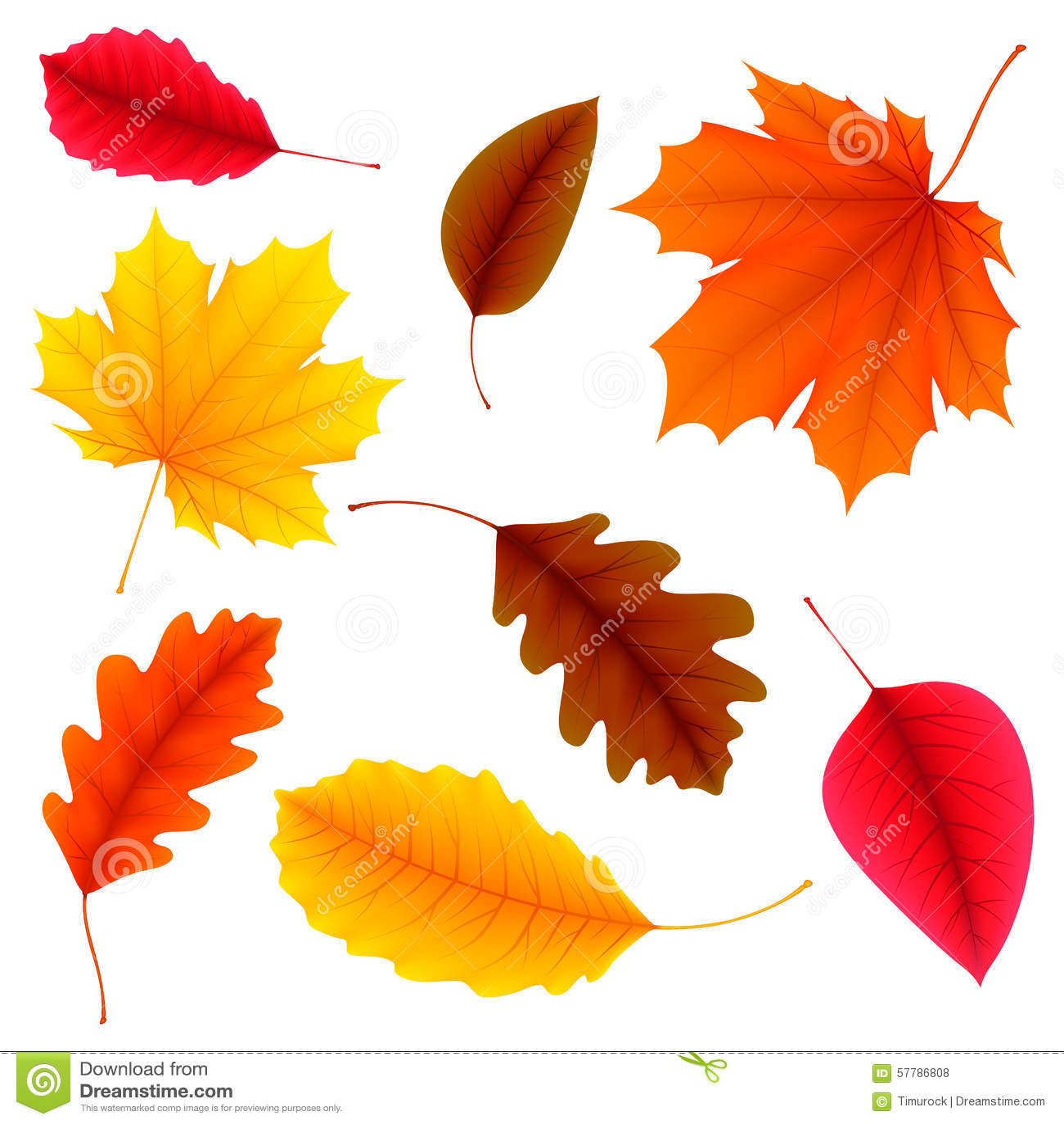 秋叶设置了