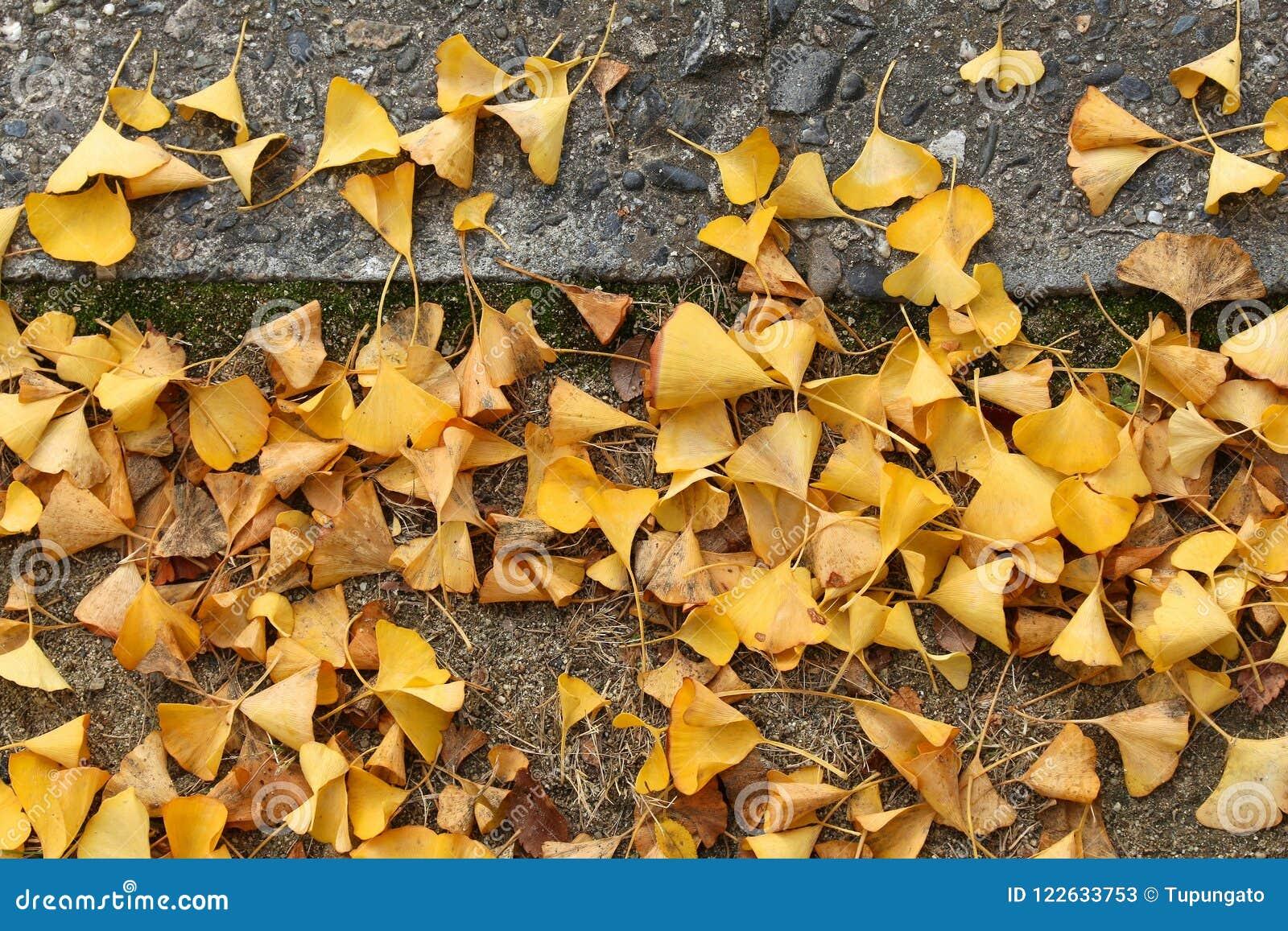 秋叶,日本