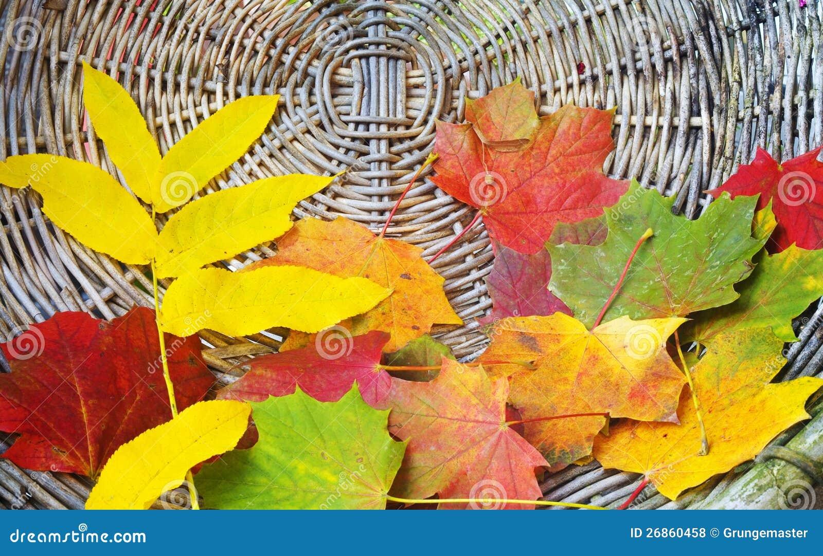 冷双成到秋叶房里表白-秋叶依剑冷双成h,秋叶冷双成,,图片