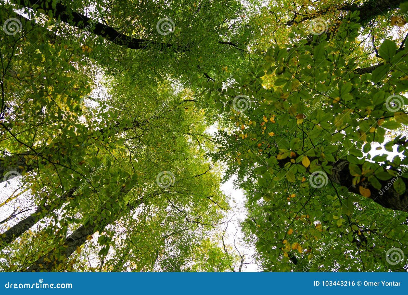 秋天、森林、五颜六色的叶子和瀑布,小河,湖视图