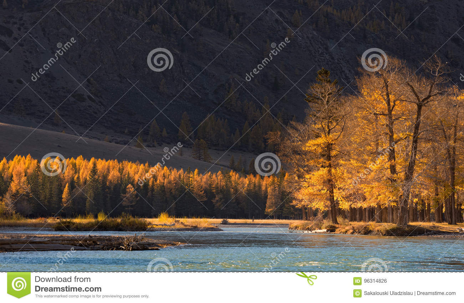 秋天与被日光照射了树的山风景和冷的蓝色劈裂