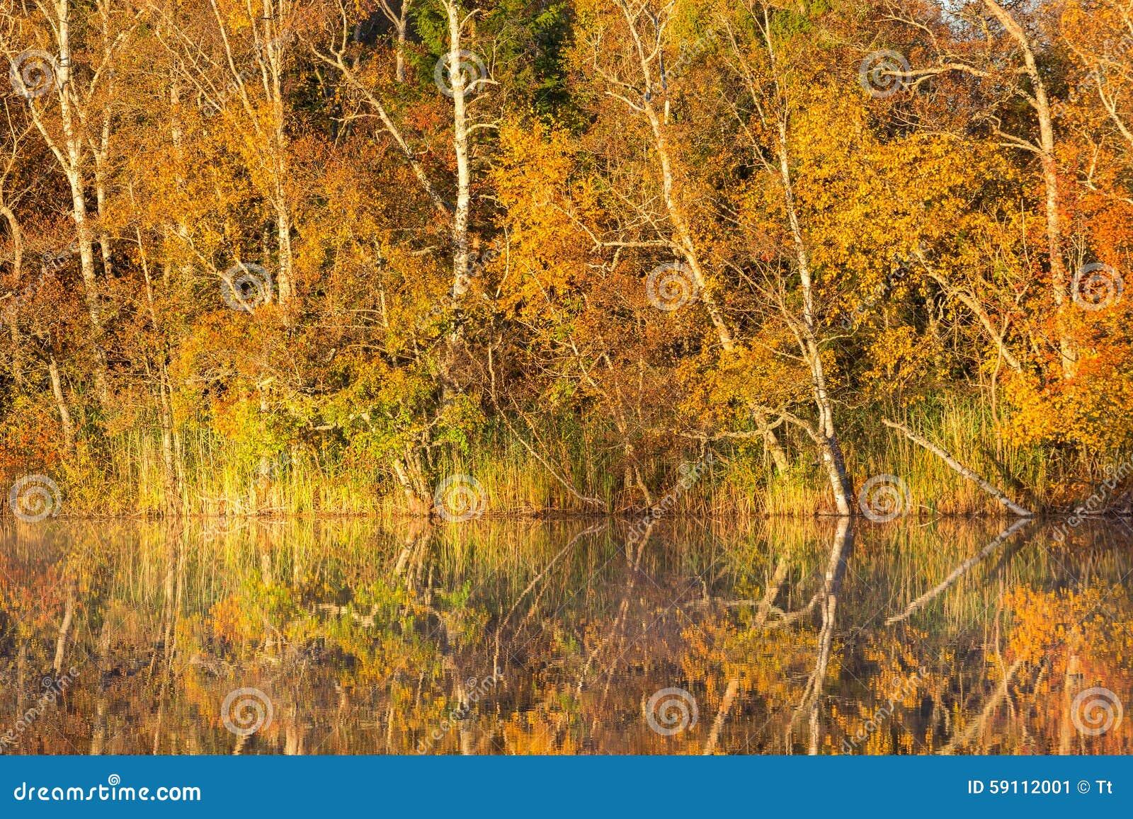 秋天反射在湖
