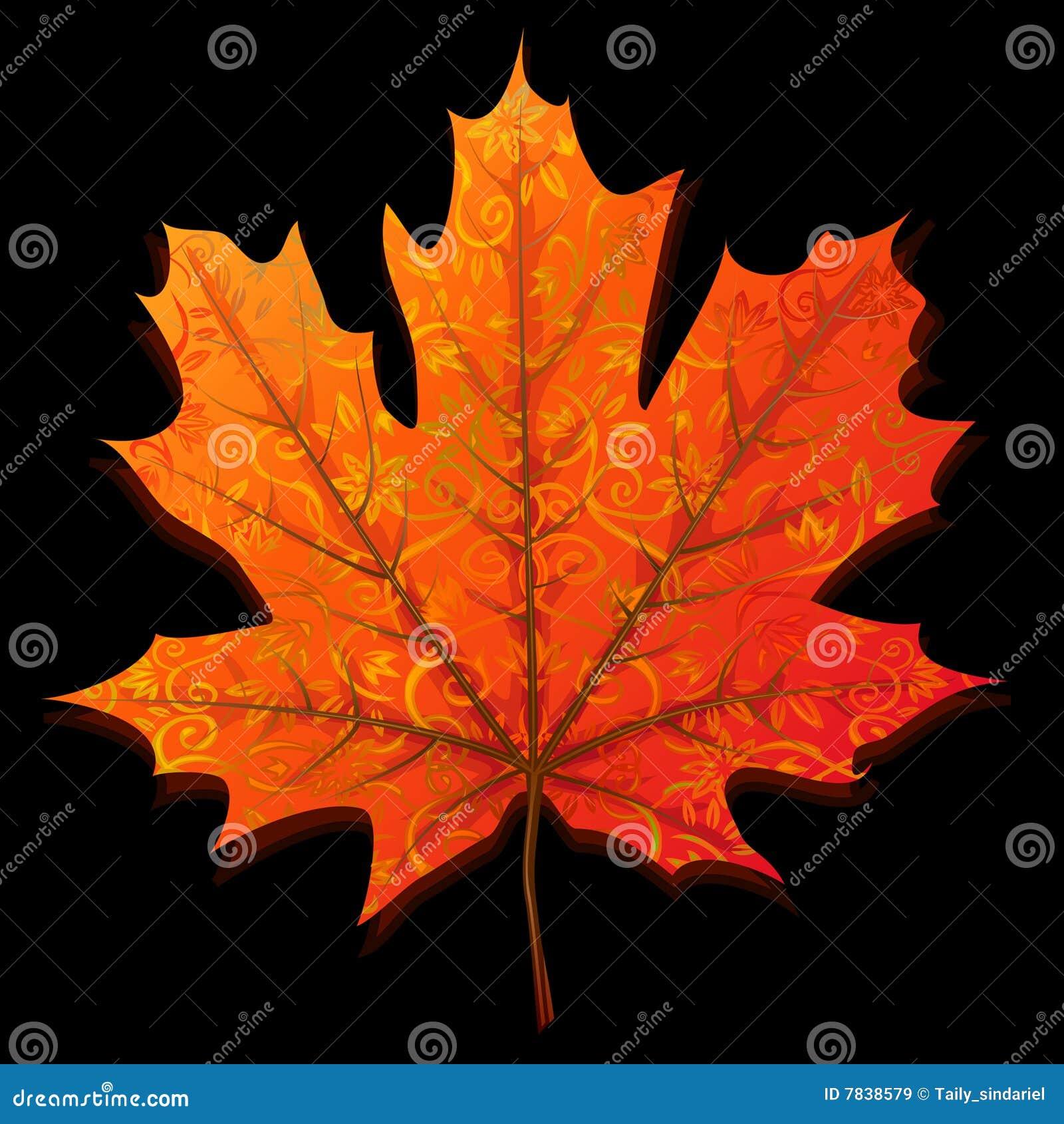 秋天叶子槭树