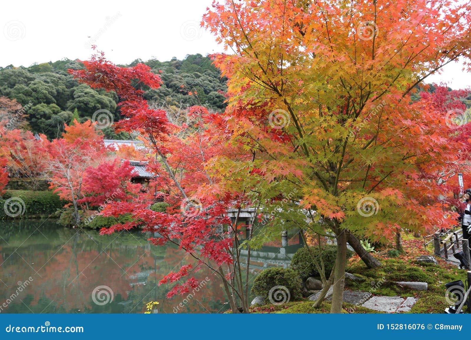 秋天在公园在日本