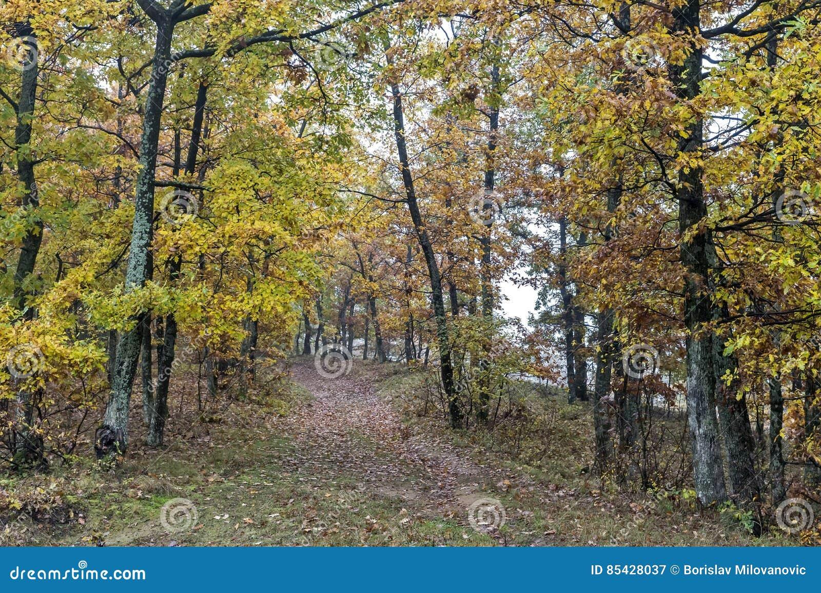 秋天天在森林
