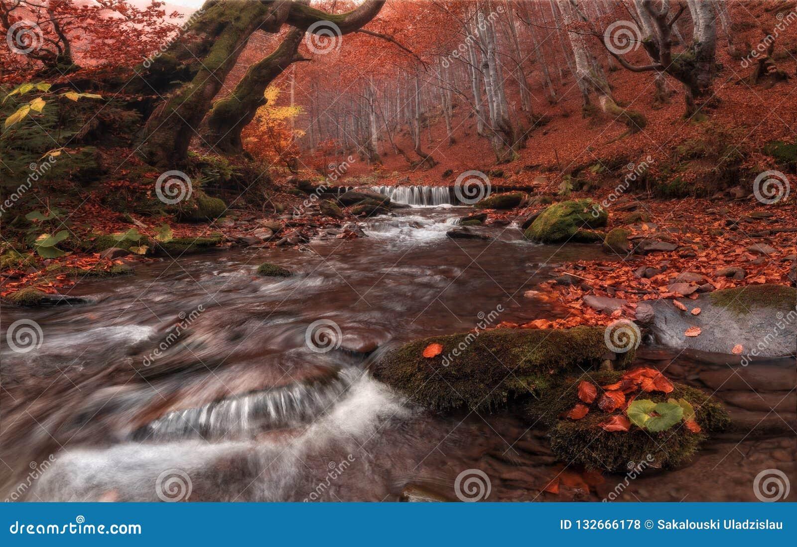 秋天小河:在红色的巨大秋天山毛榉森林风景与美丽的山小河和雾灰色森林迷惑了Autum