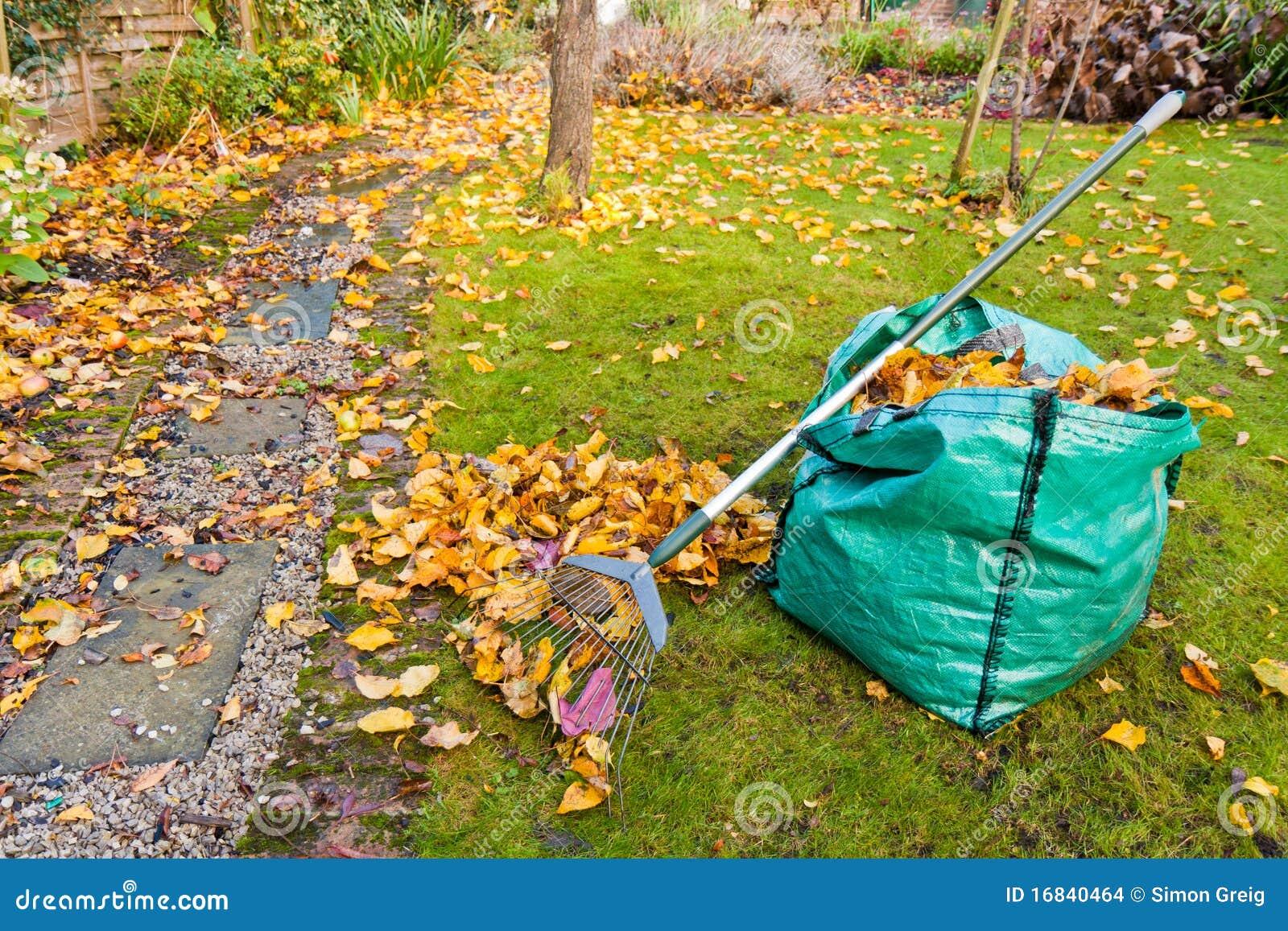 秋天庭院维护