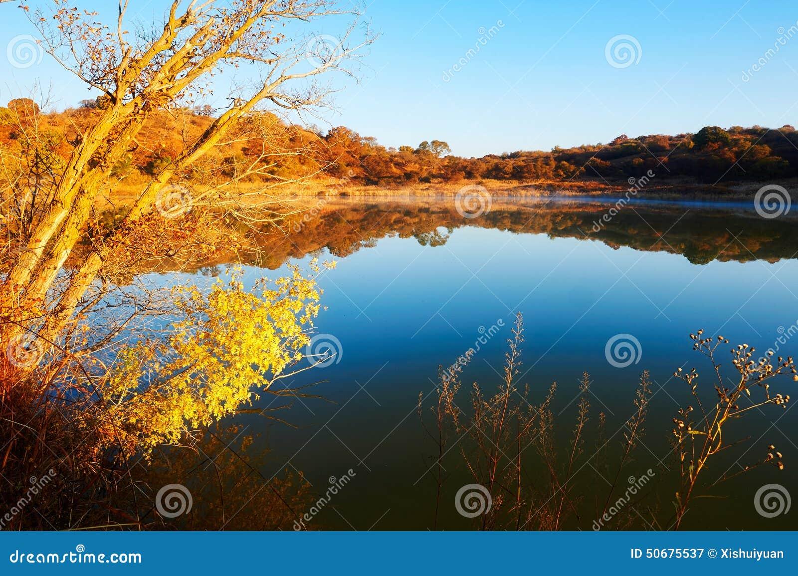 Download 秋天树和大海日出 库存图片. 图片 包括有 早晨, 充气救生艇, 日落, 照片, 森林, beautifuler - 50675537