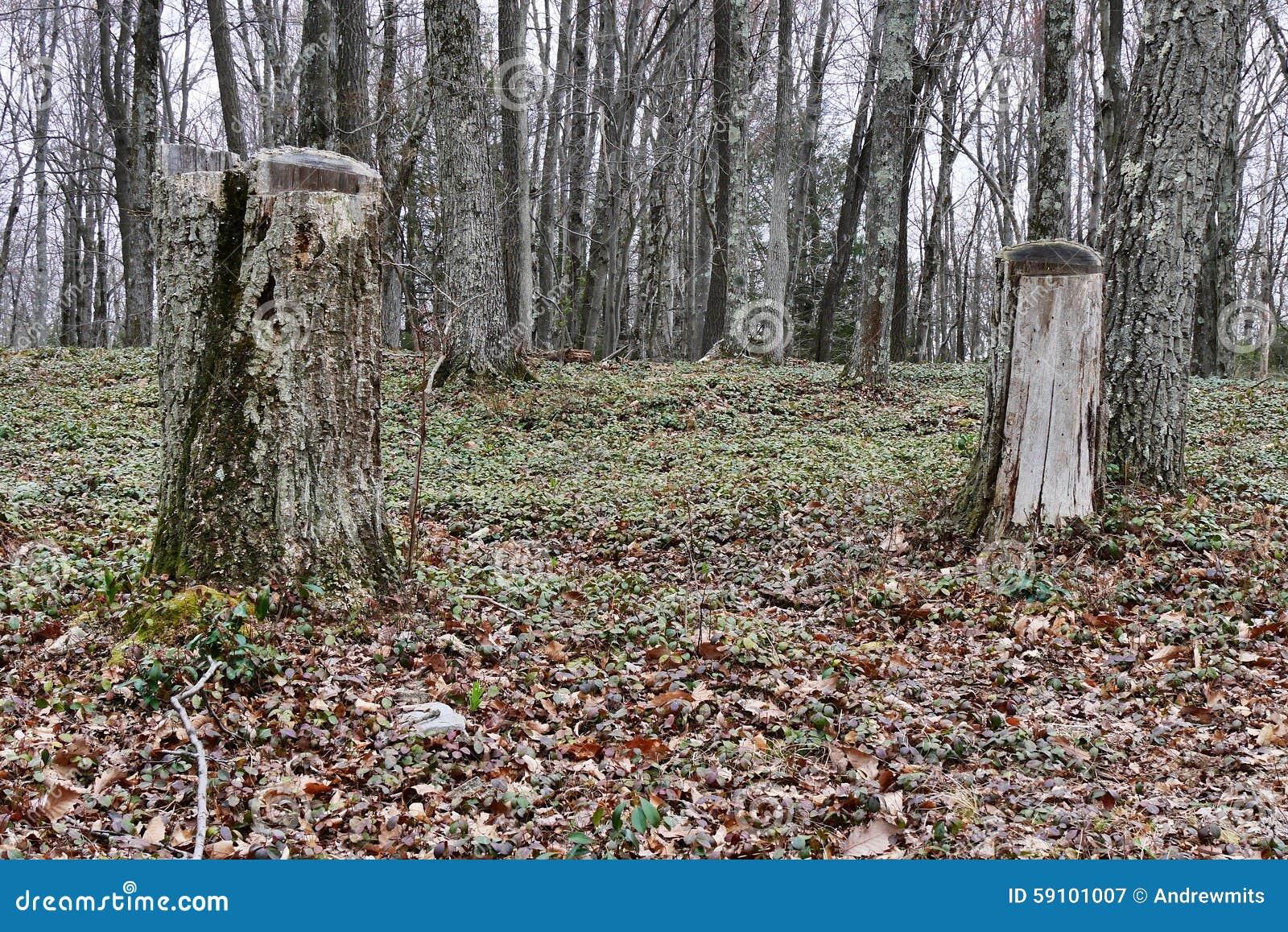 秋天森林床