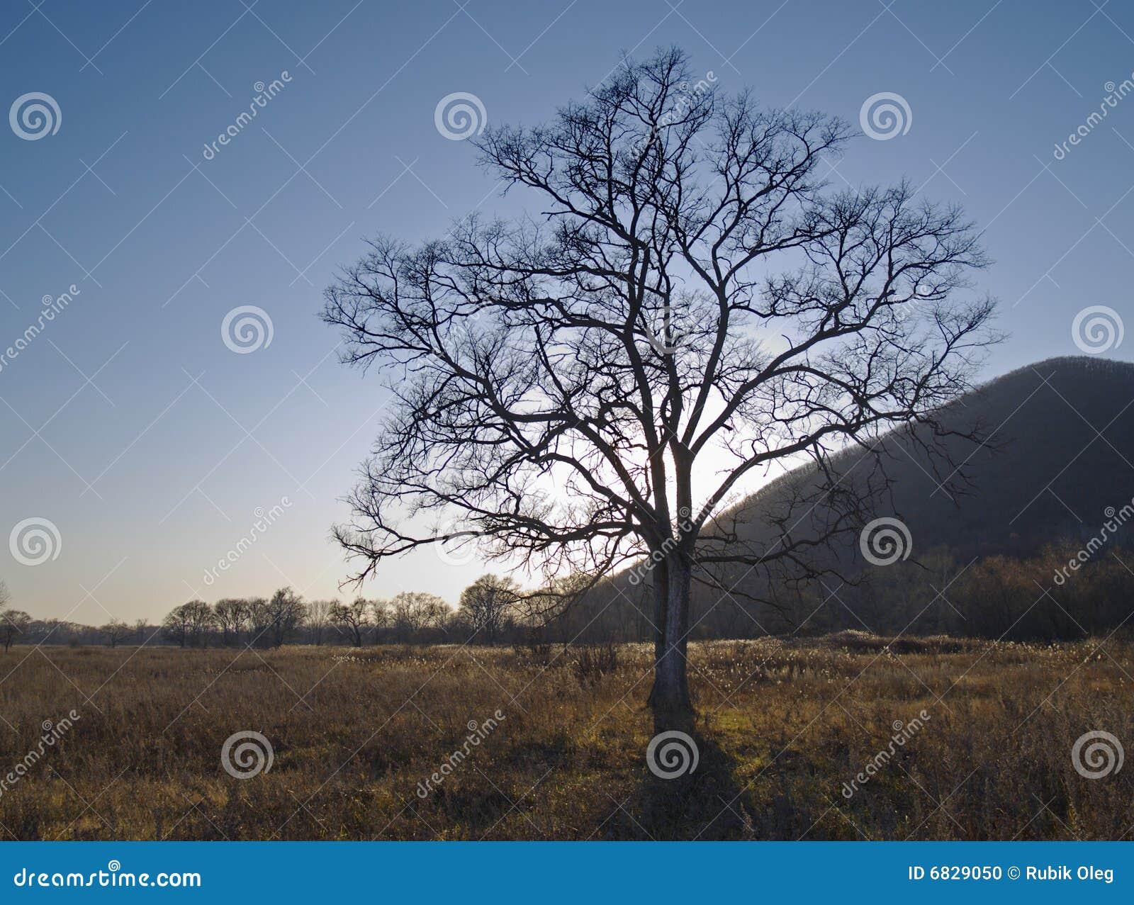 秋天榆木偏僻老