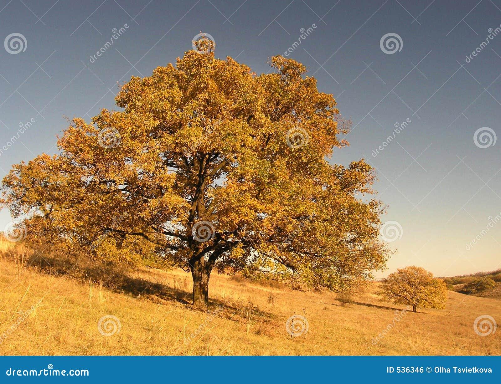 Download 秋天横向结构树 库存照片. 图片 包括有 橡木, 其它, 地球, 节假日, 森林, 工厂, 盖子, 幸福, 玻色子 - 536346