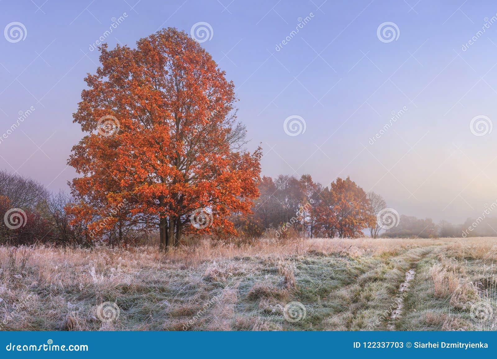秋天横向 惊人的秋天在11月 早晨秋季自然 有树冰在草和红色叶子的冷的草甸在树