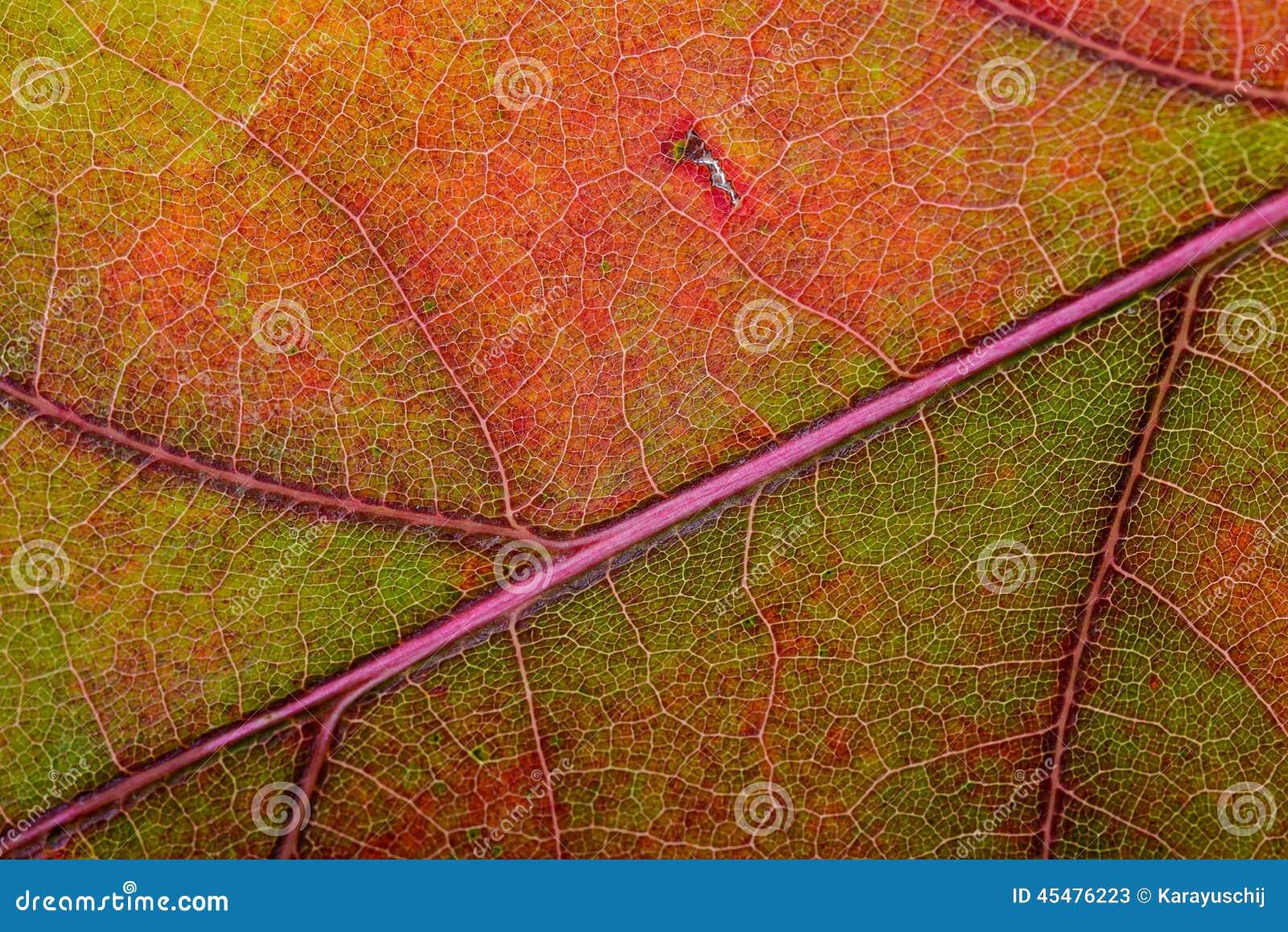秋天橡木叶子宏指令