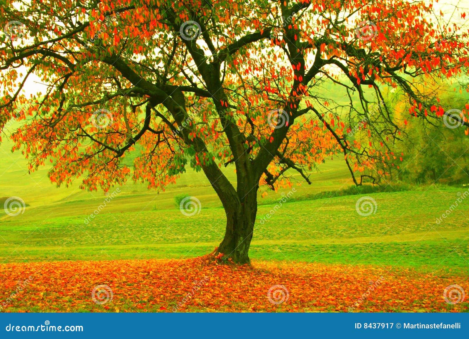 秋天pic结构树.图片