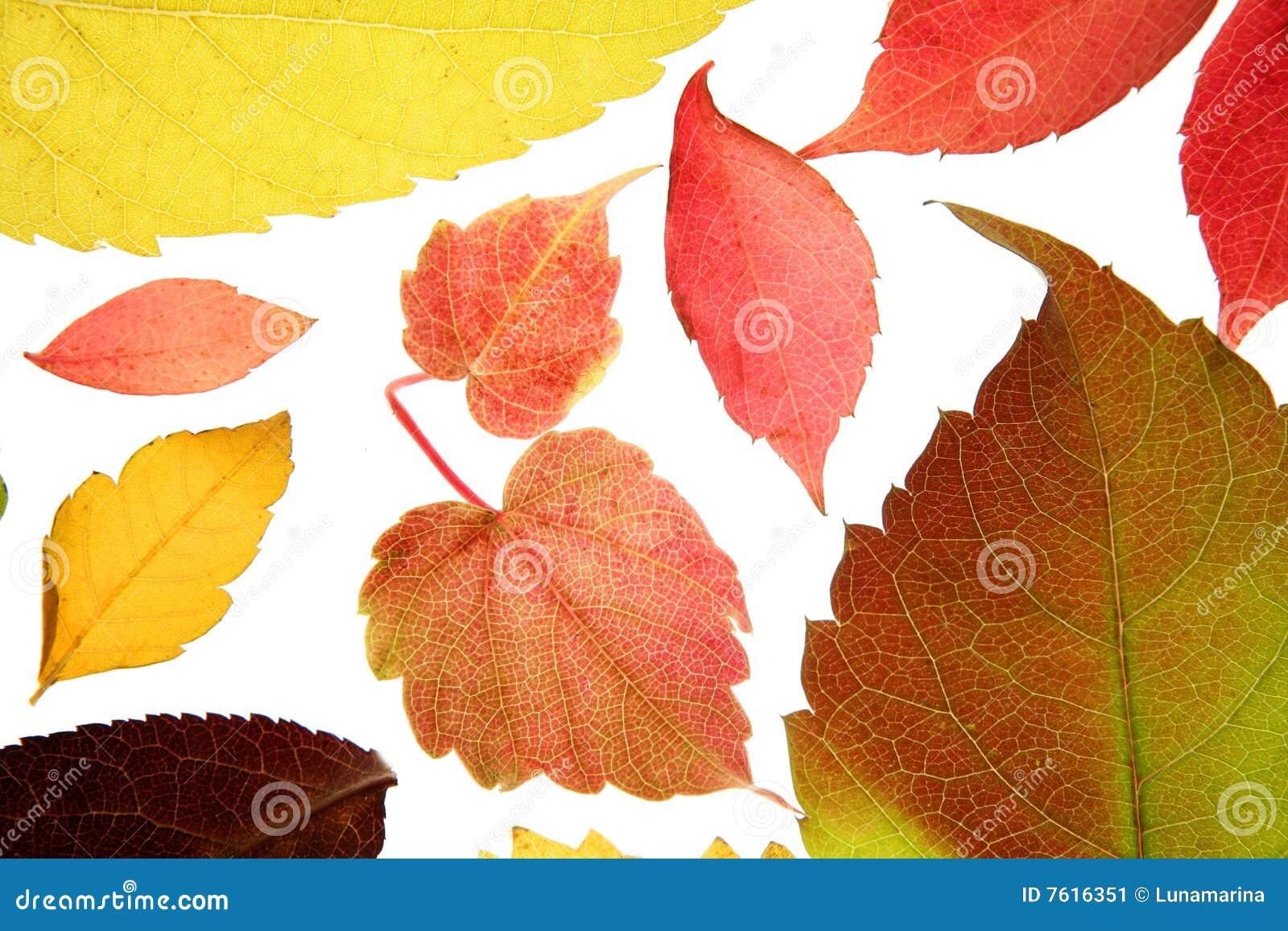 秋天背景仍然颜色叶子工作室白色